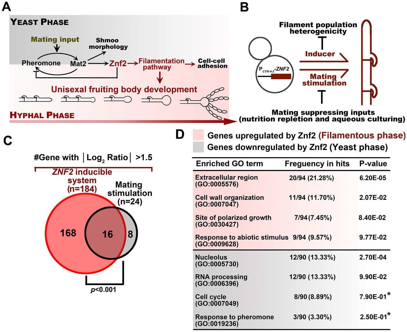 Identification of the genetic network in hyphal and yeast populations.
