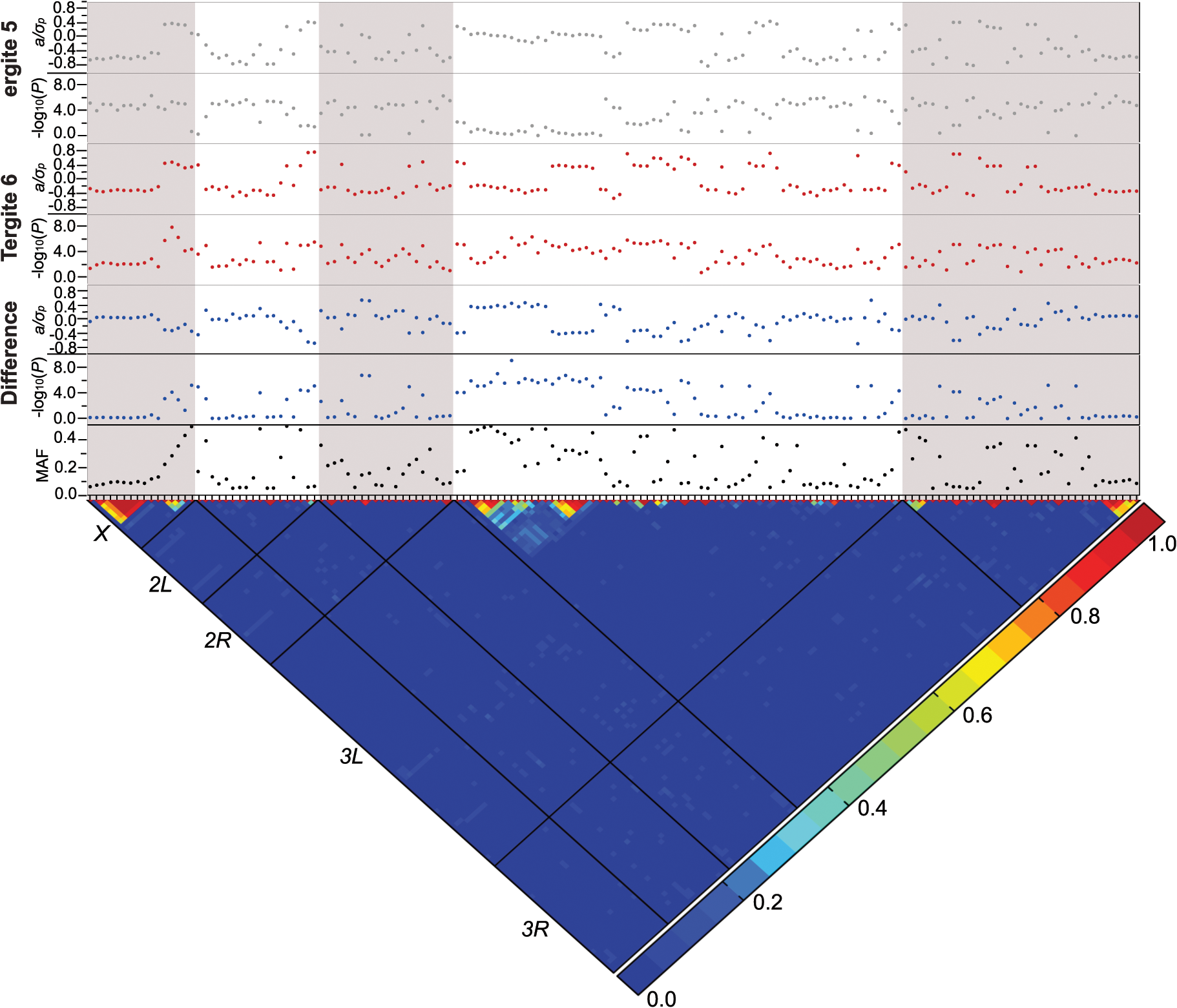 Genome-wide association analyses.