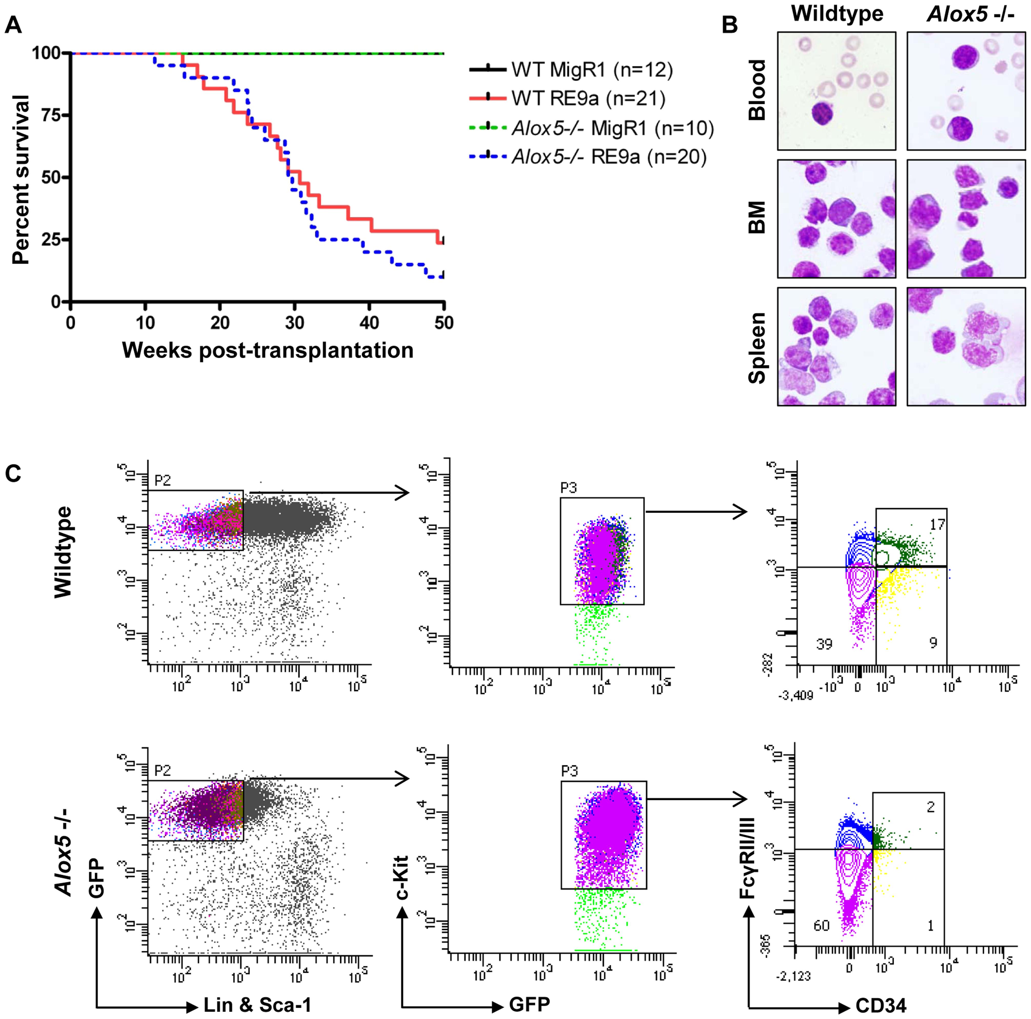 Loss of <i>Alox5</i> does not block RE9a leukemia induction <i>in vivo</i>.