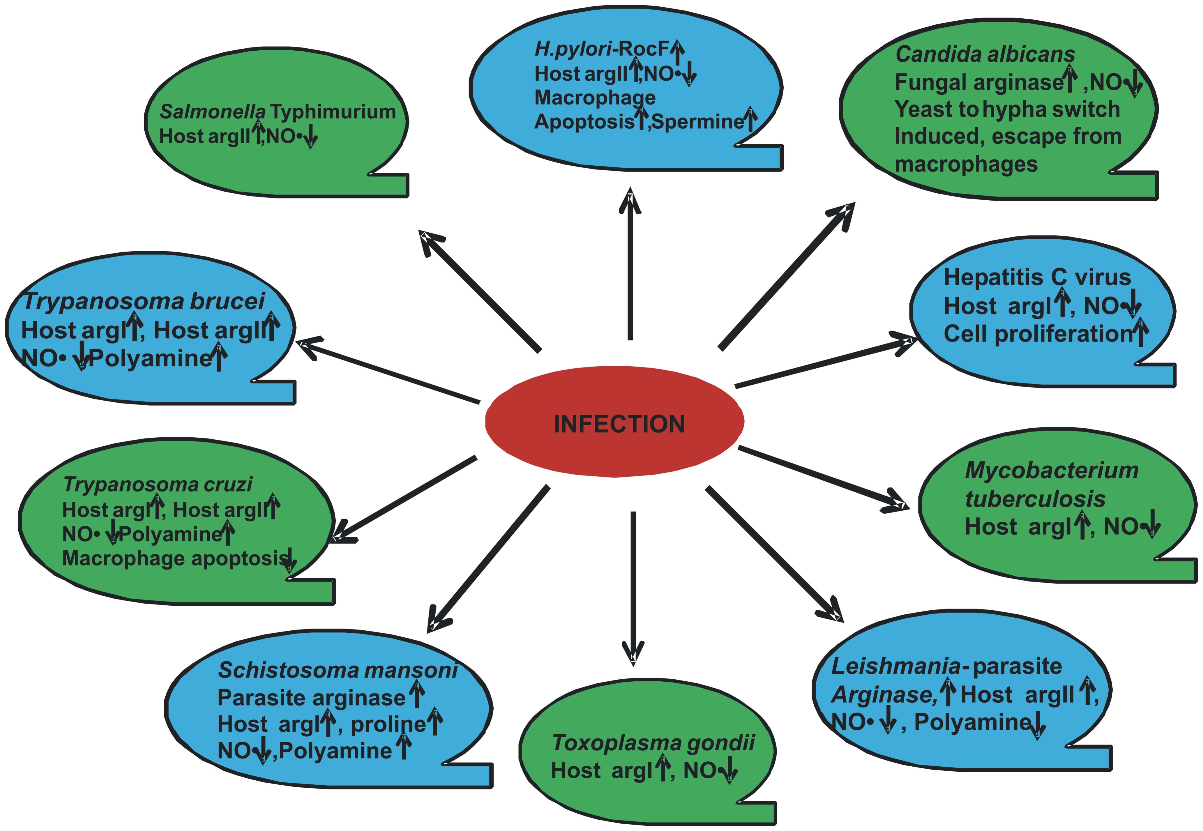Modulation of arginase by various pathogens.