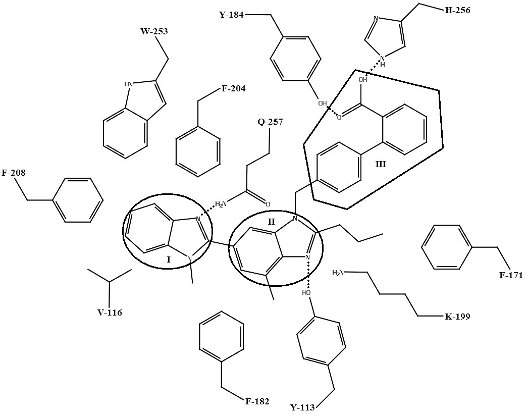 Schéma väzby telmisartanu s aktívnym miestom AT<sub>1</sub> receptora