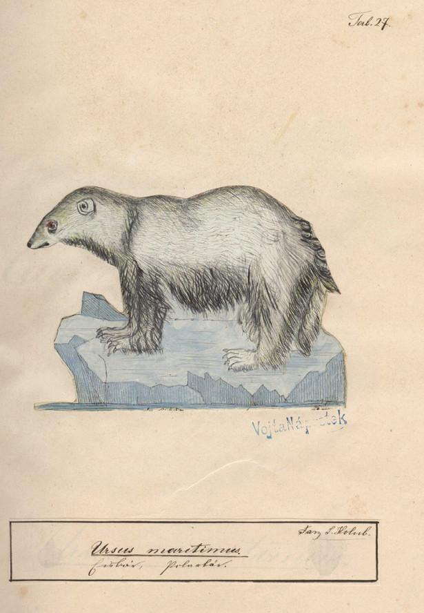 Kresba Františka Holuba ze Zoologického atlasu, který sestavil pro svého syna Emila v letech 1869–1870