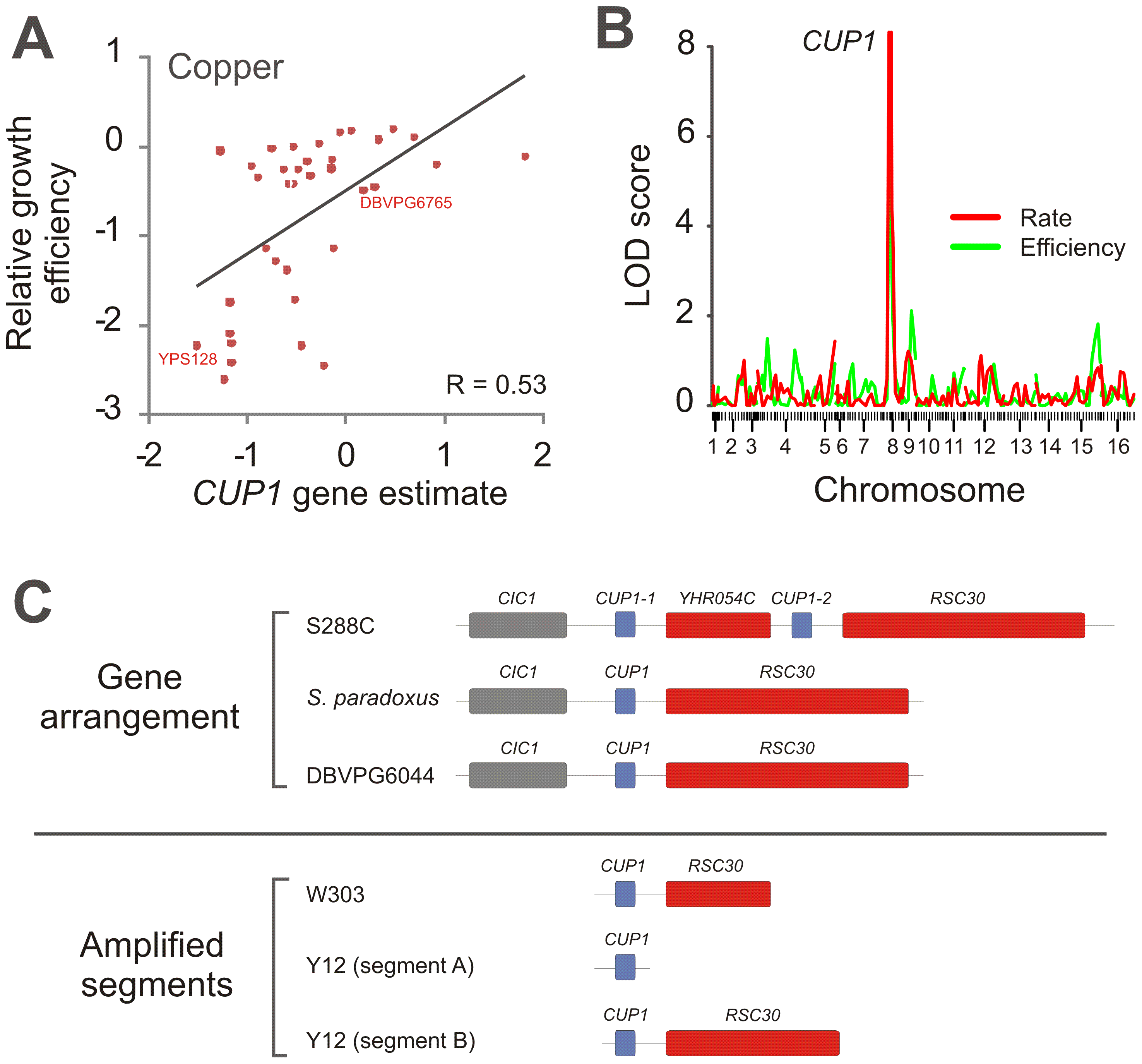 Parallel amplifications of <i>CUP1</i> in <i>S. cerevisiae</i> populations reflect convergent evolution for copper tolerance.