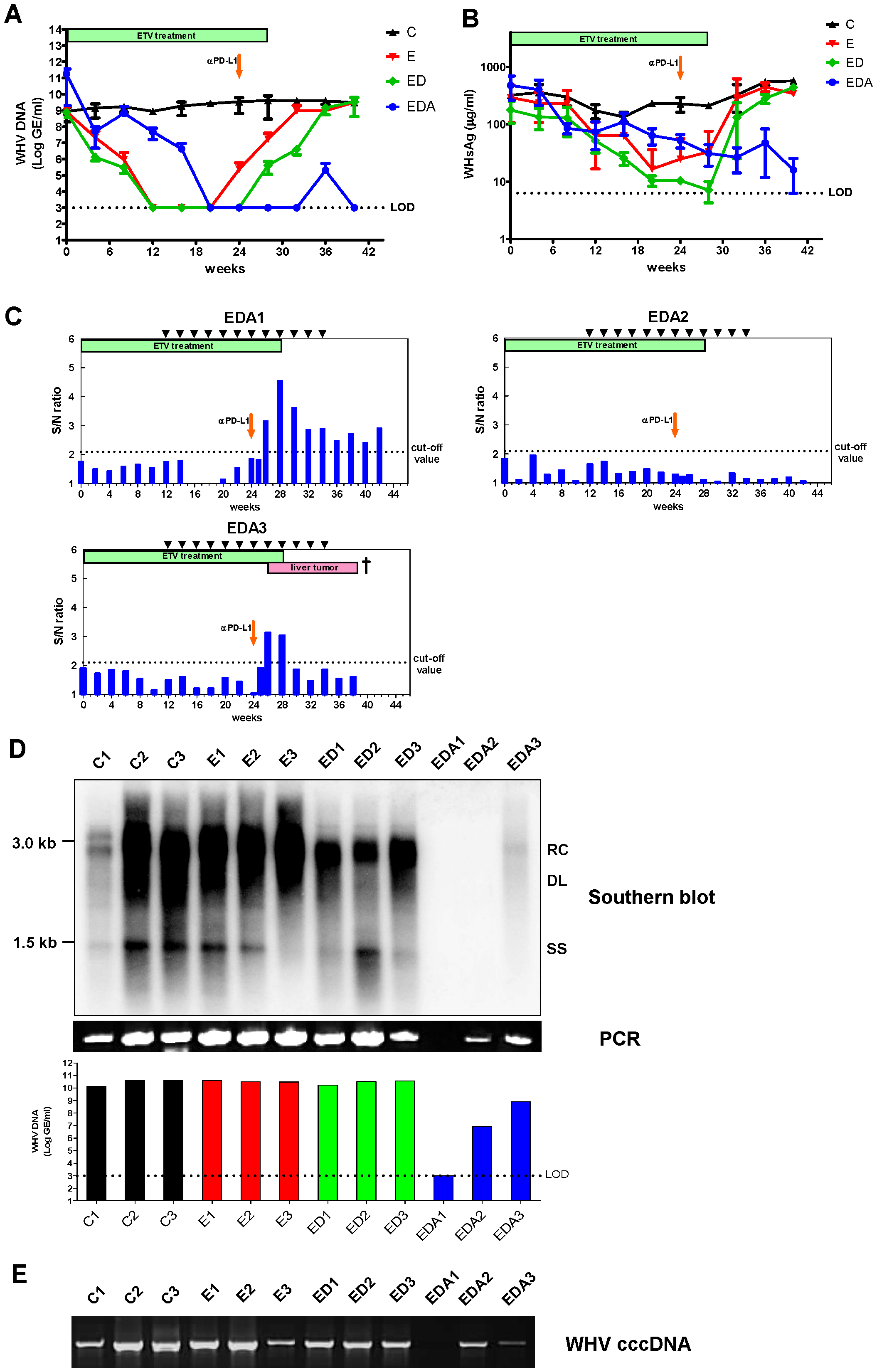 <i>In vivo</i> PD-L1 blockade synergizes with therapeutic vaccination to control WHV replication.