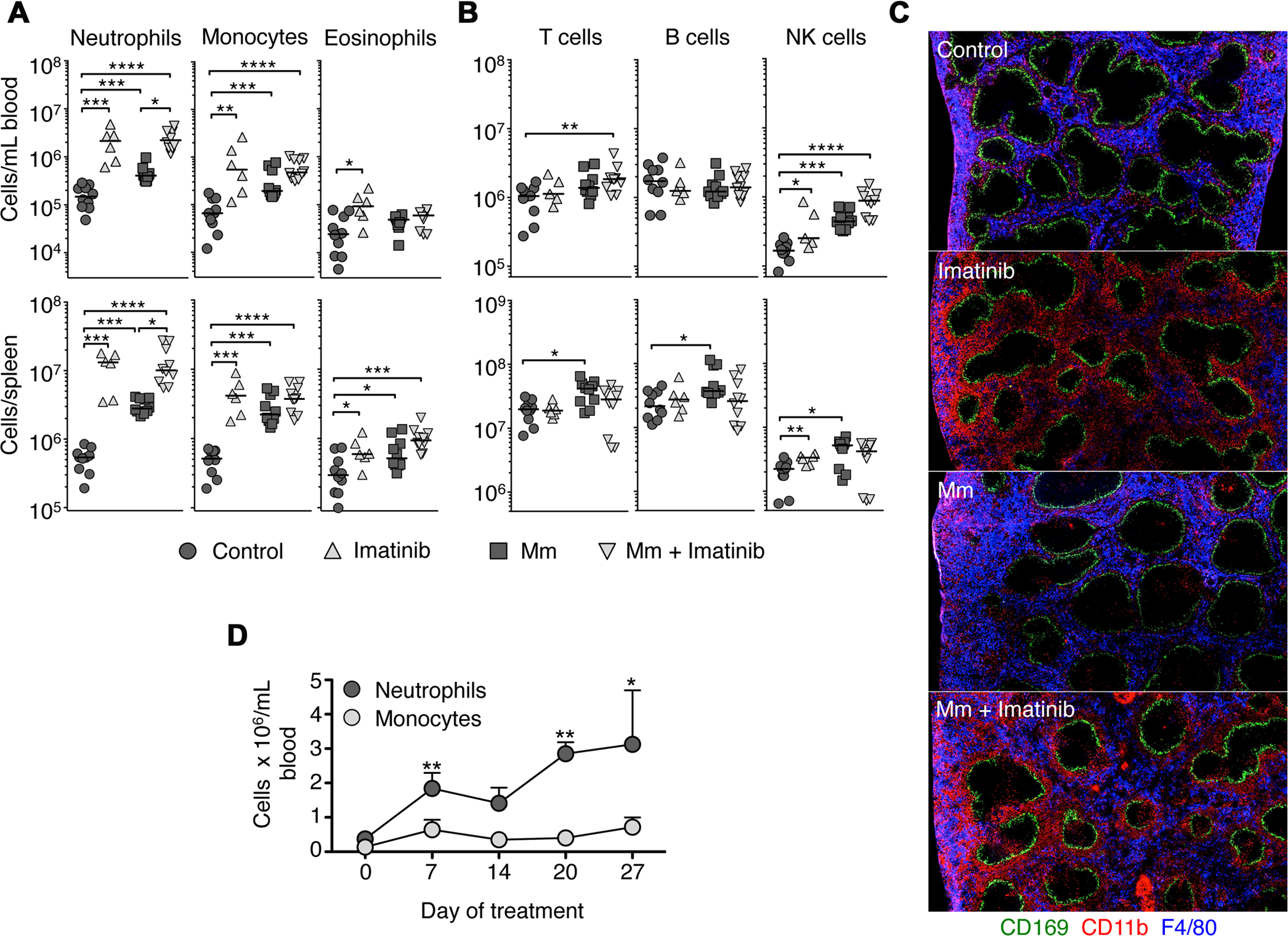 Imatinib treatment induces expansion of myeloid cells in mouse spleen and blood.