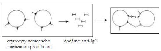 Přímý Coombsův test slouží k průkazu protilátek vázaných na erytrocyt, při dodání antiIgG-protilátky dochází k aglutinaci erytrocytů s navázanou protilátkou.