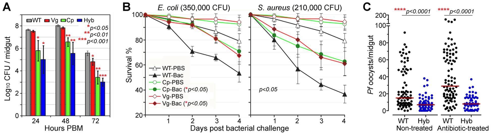 Antibacterial resistance of immune-enhanced transgenic mosquitoes.