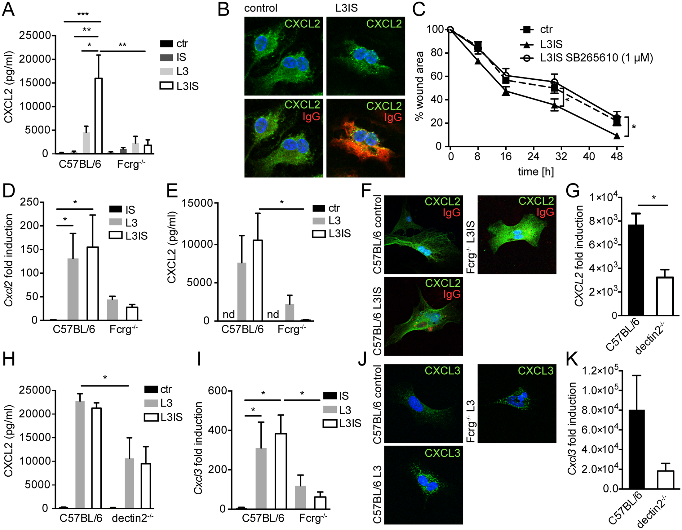 Helminths and antibodies trigger CXCL2 release by MΦ or MF via antibody-Fcrg- or Fcrg-chain/ dectin2 signaling, respectively and MF respond to MΦ-produced CXCR2 ligands in vitro.