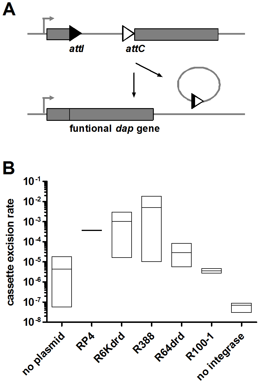 Conjugation increases IntI1-dependent cassette excision rate in E. <i>coli</i>.