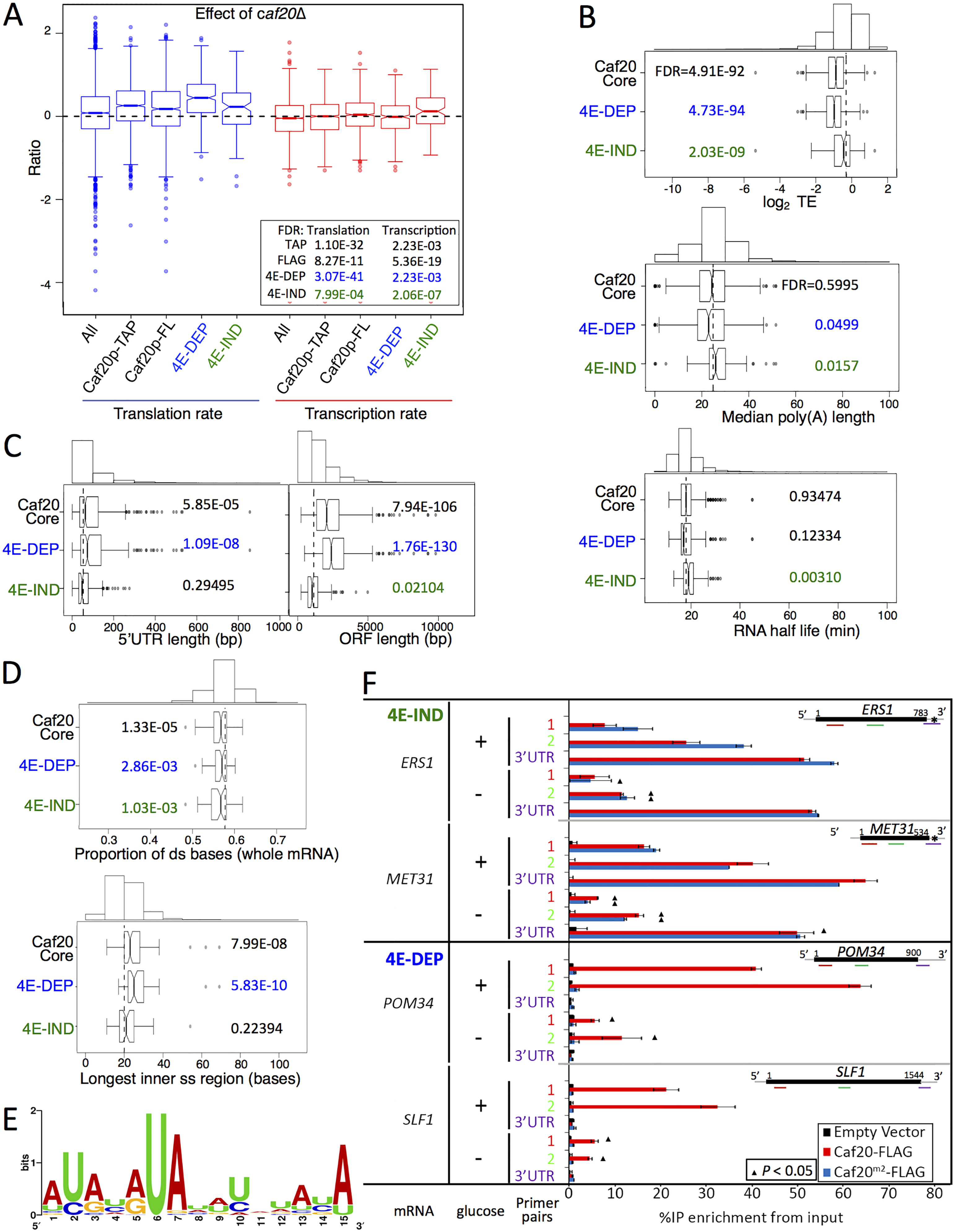 Features of Caf20p 4E-DEP and 4E-IND core bound mRNAs.