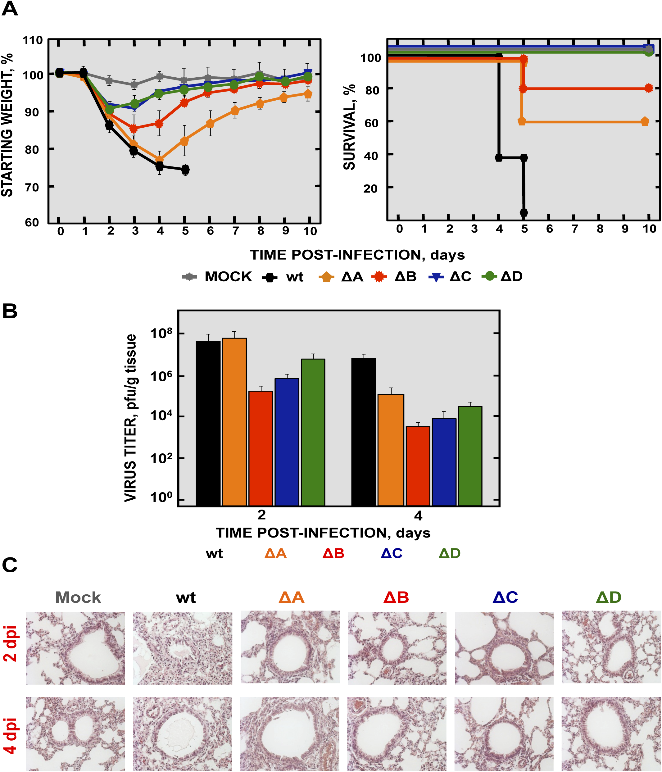 Virulence and viral growth of SARS-CoV-nsp1* mutants <i>in vivo</i>.