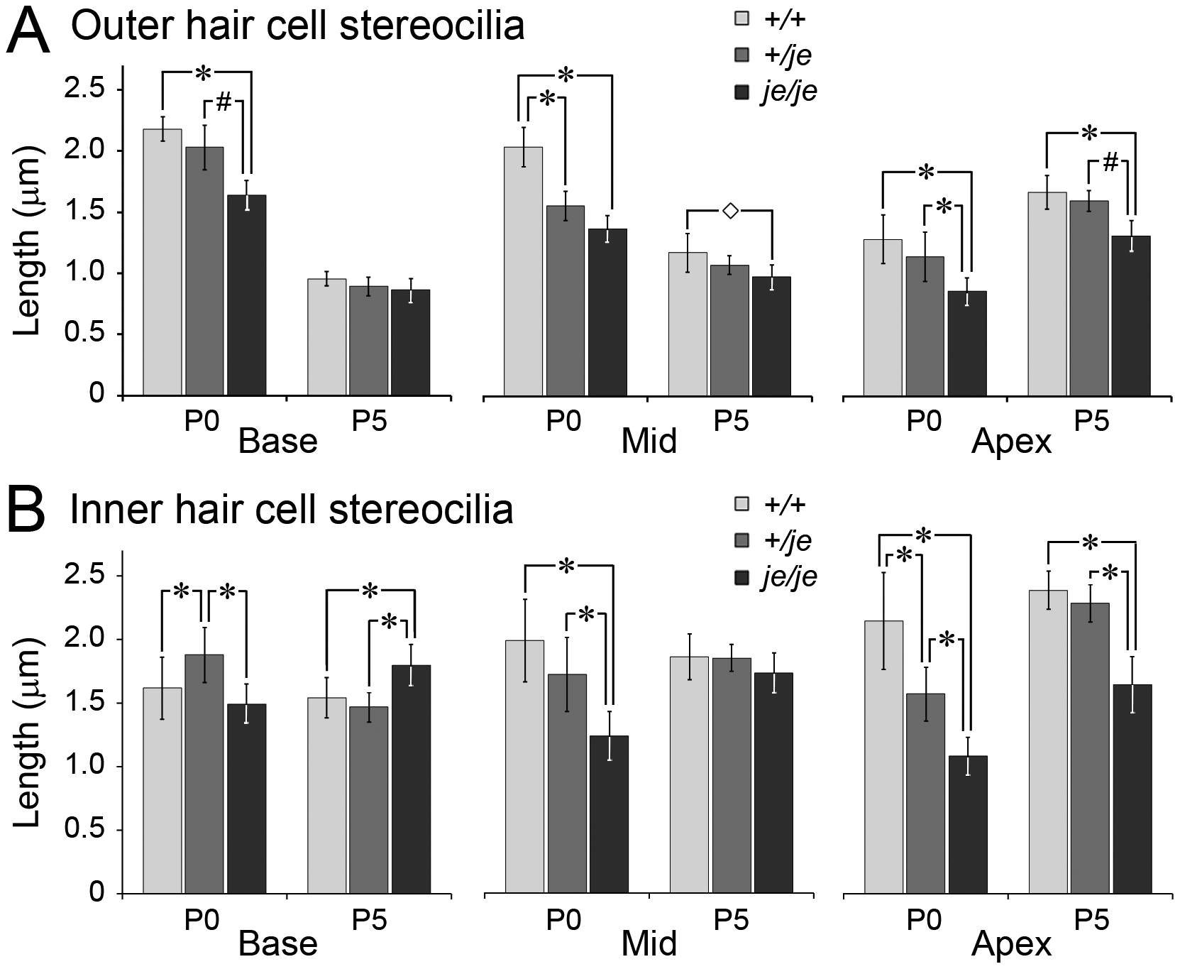 Stereociliary length measurements for cochlear hair cells in early postnatal <i>+/+</i>, <i>+/je</i>, and <i>je/je</i> mice.