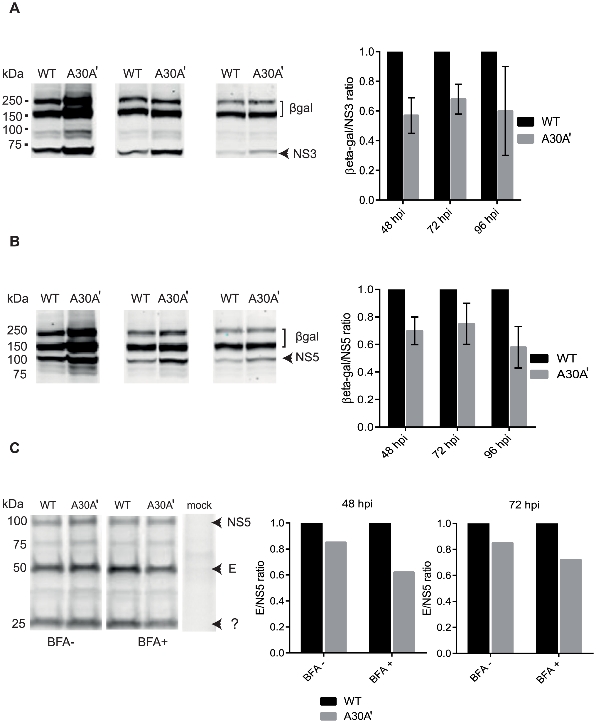 PRF disrupts equimolarity of viral protein synthesis in replicon-transfected and virus-infected cells.