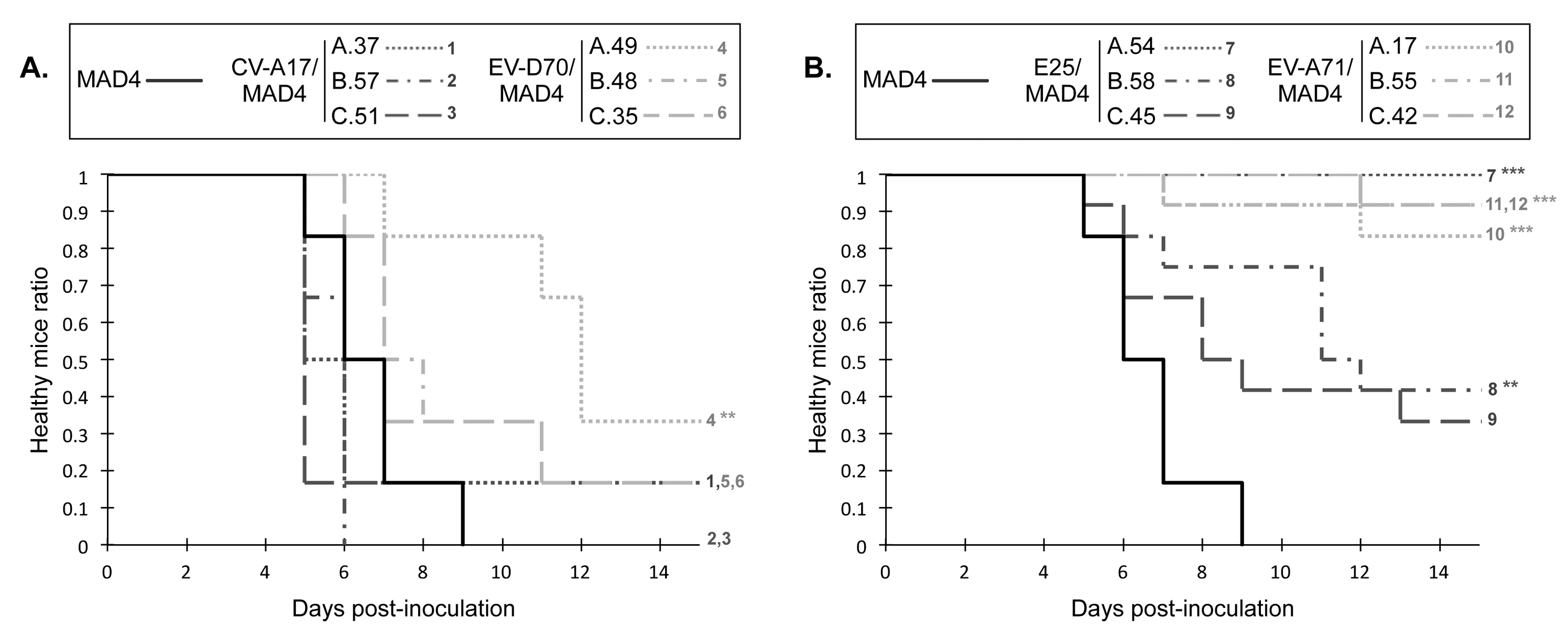 Neurovirulence of MAD4 and selected recombinant viruses in PVR-Tg mice.