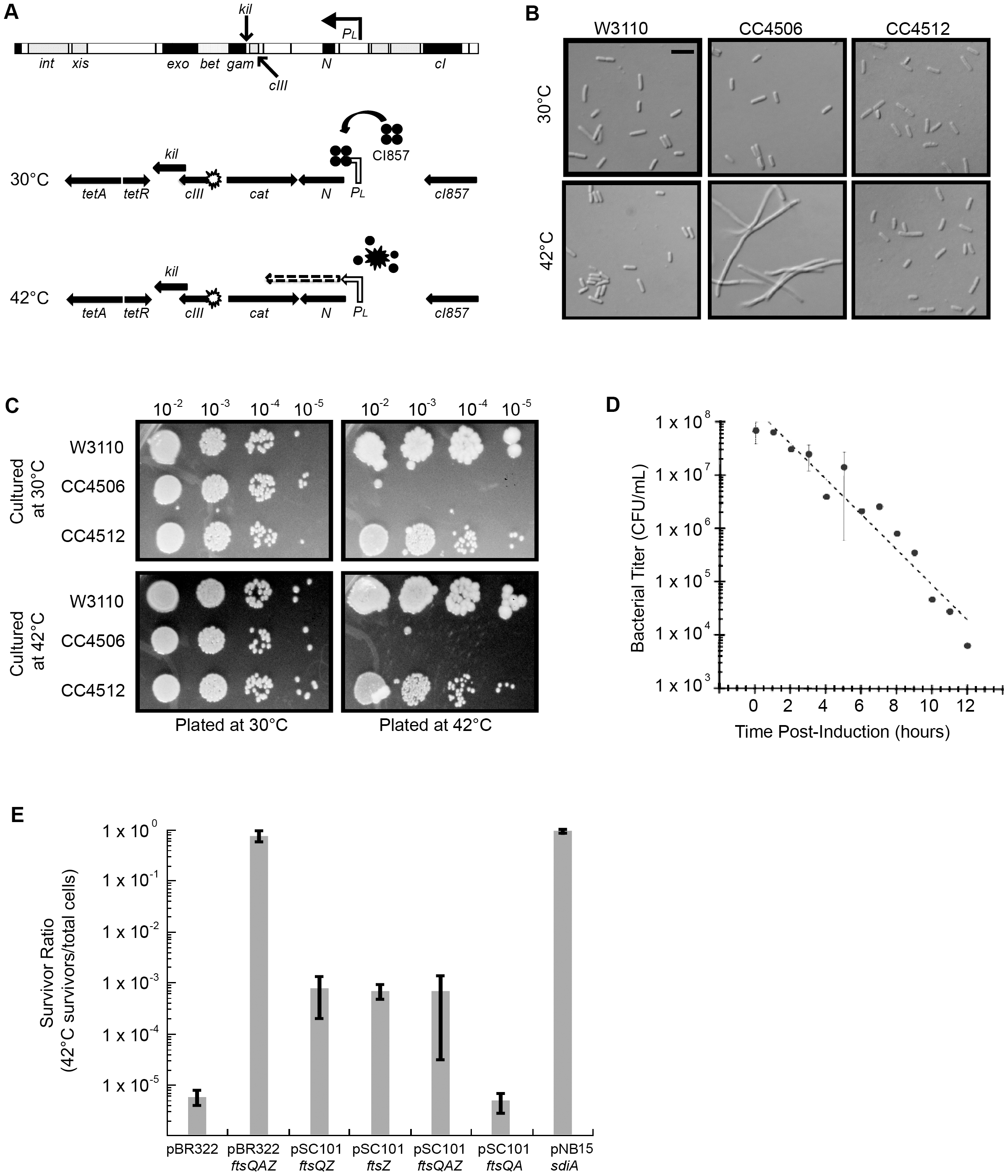 Induction of λ <i>kil</i> interferes with <i>E. coli</i> cell division, but is suppressed by <i>ftsZ</i> overexpression.