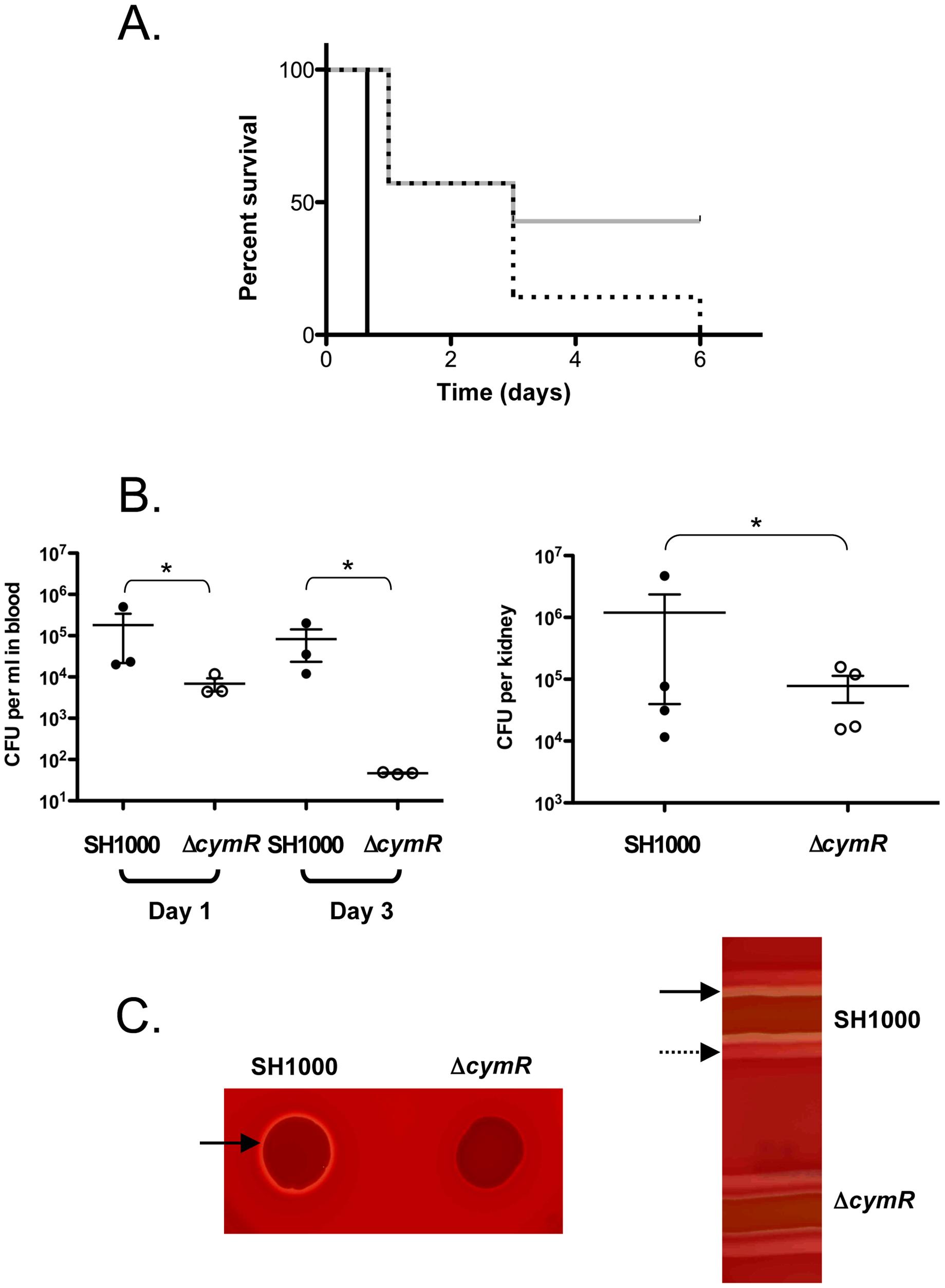 Role of CymR during <i>S. aureus</i> infection.
