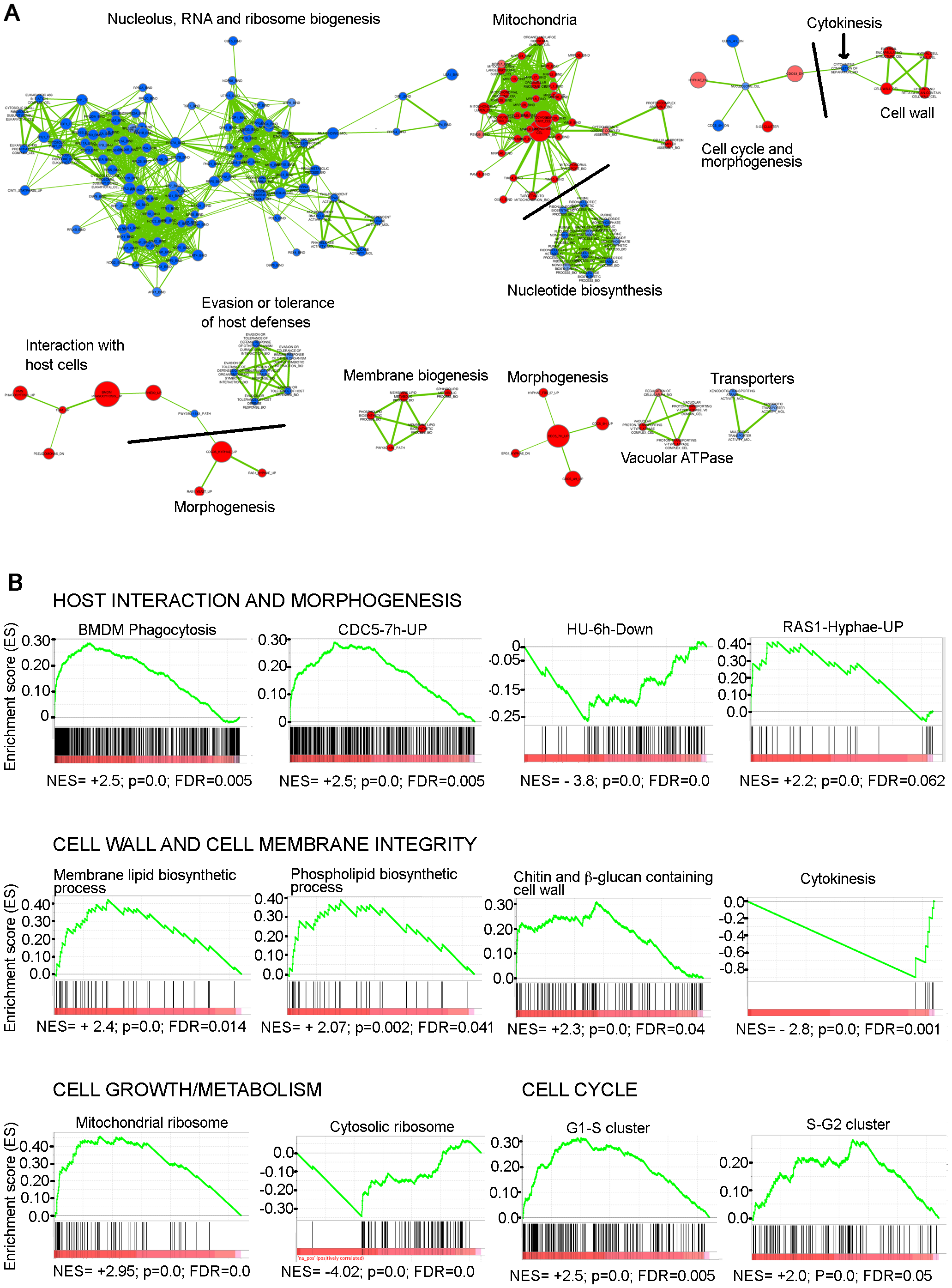 GSEA analysis of the genes differentially expressed in the absence of Med31 in <i>C. albicans</i>.