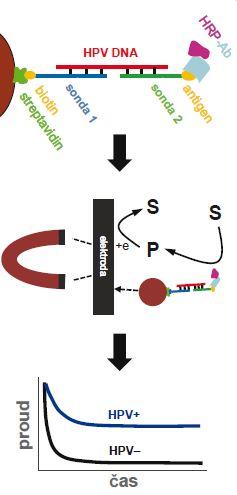 Elektrochemický test pro detekci virové DNA.