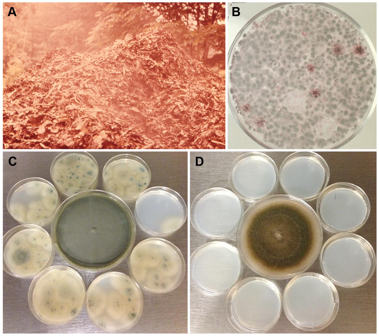 Dispersibility of <i>A. fumigatus</i> conidia.
