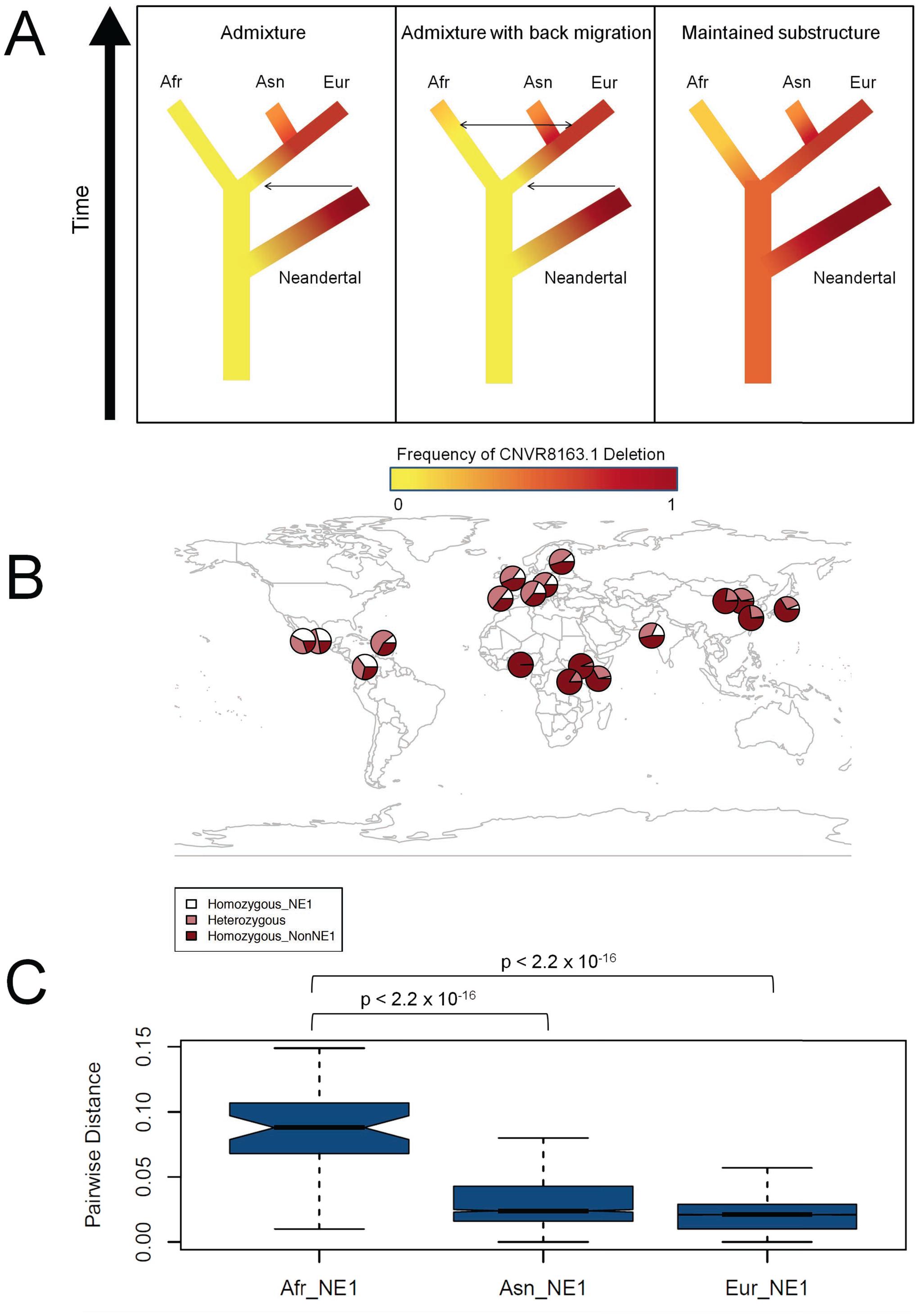 Ancient African origins of the NE1 haplogroup.