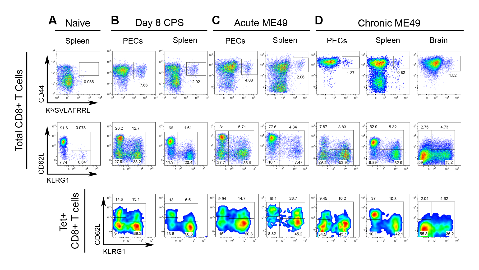 Tgd057-specific CTLs are induced by CPS vaccination and natural ME49 infection.