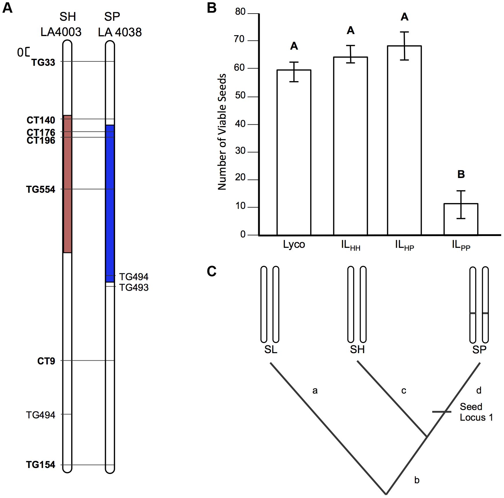 Test of allelism at seed sterility locus <i>sss2.1</i>.