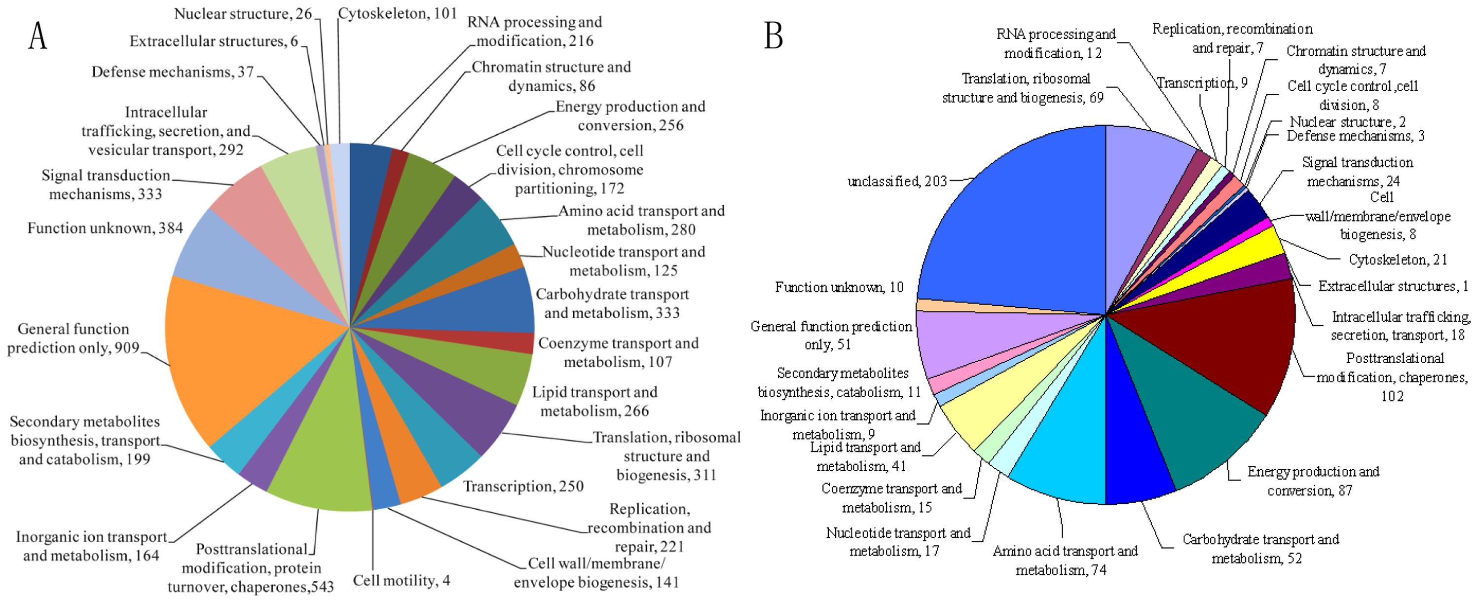 Annotation of the <i>A. oligospora</i> genome and proteome by COG/KOG categories.
