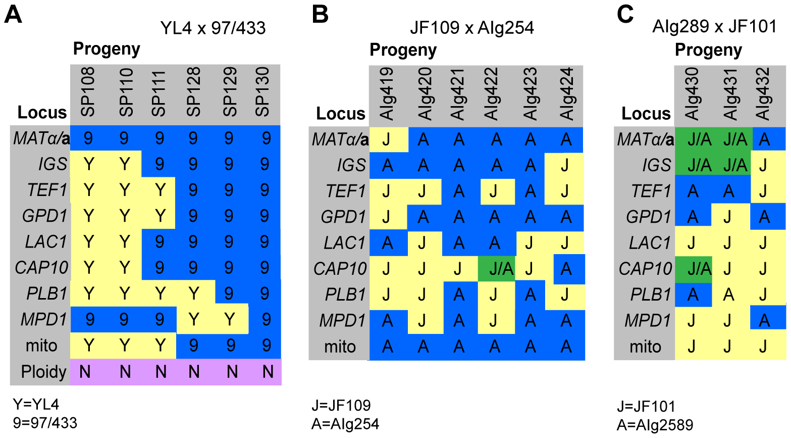 Molecular characterisation of progeny from marked outgroup crosses.