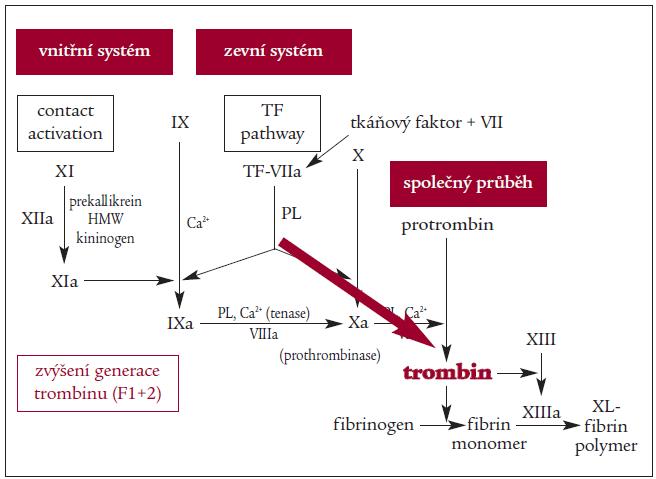 Schéma. Progresivní generace trombinu při sepsi.