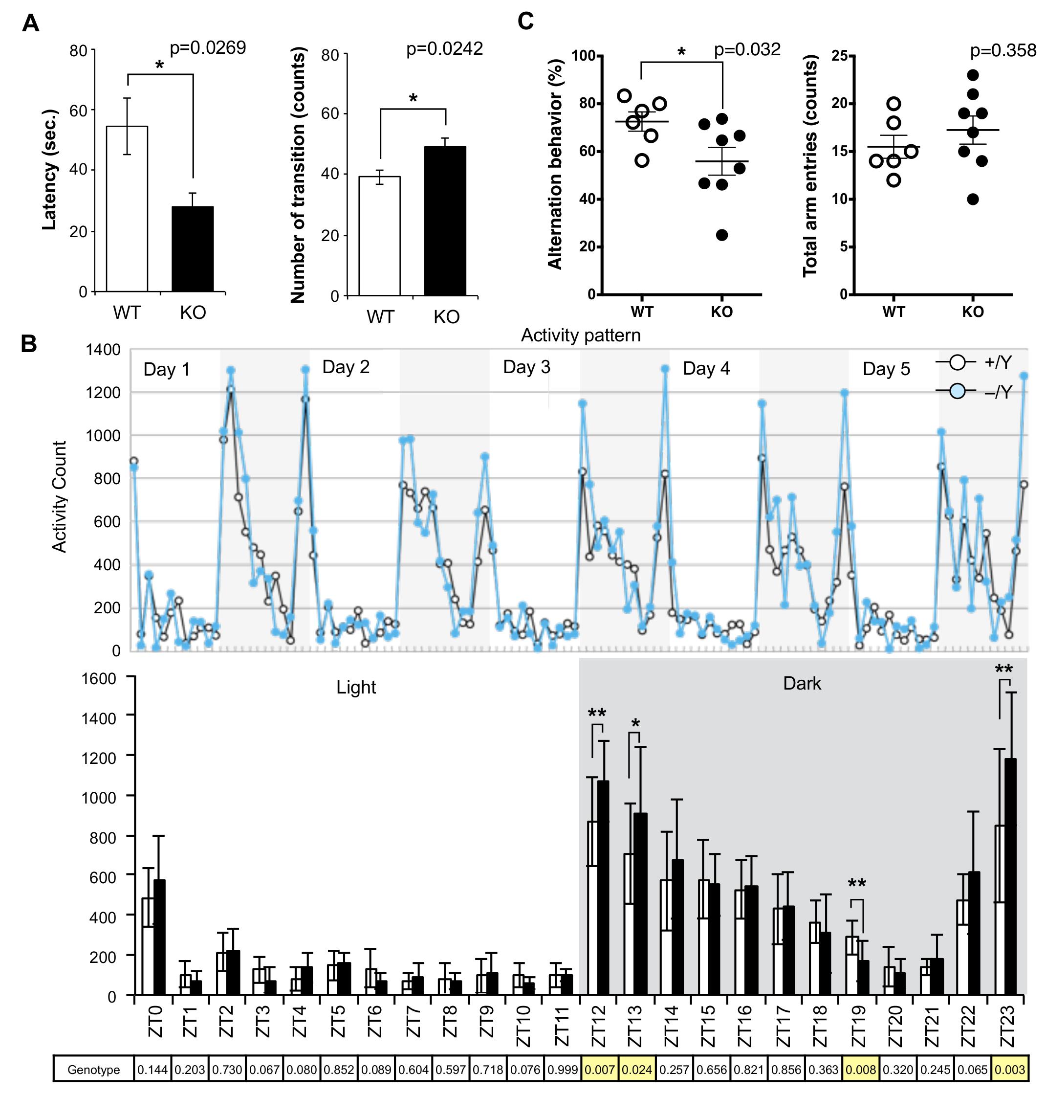 Abnormal behavior in the <i>Sirh11/Zcchc16</i> KO mice.