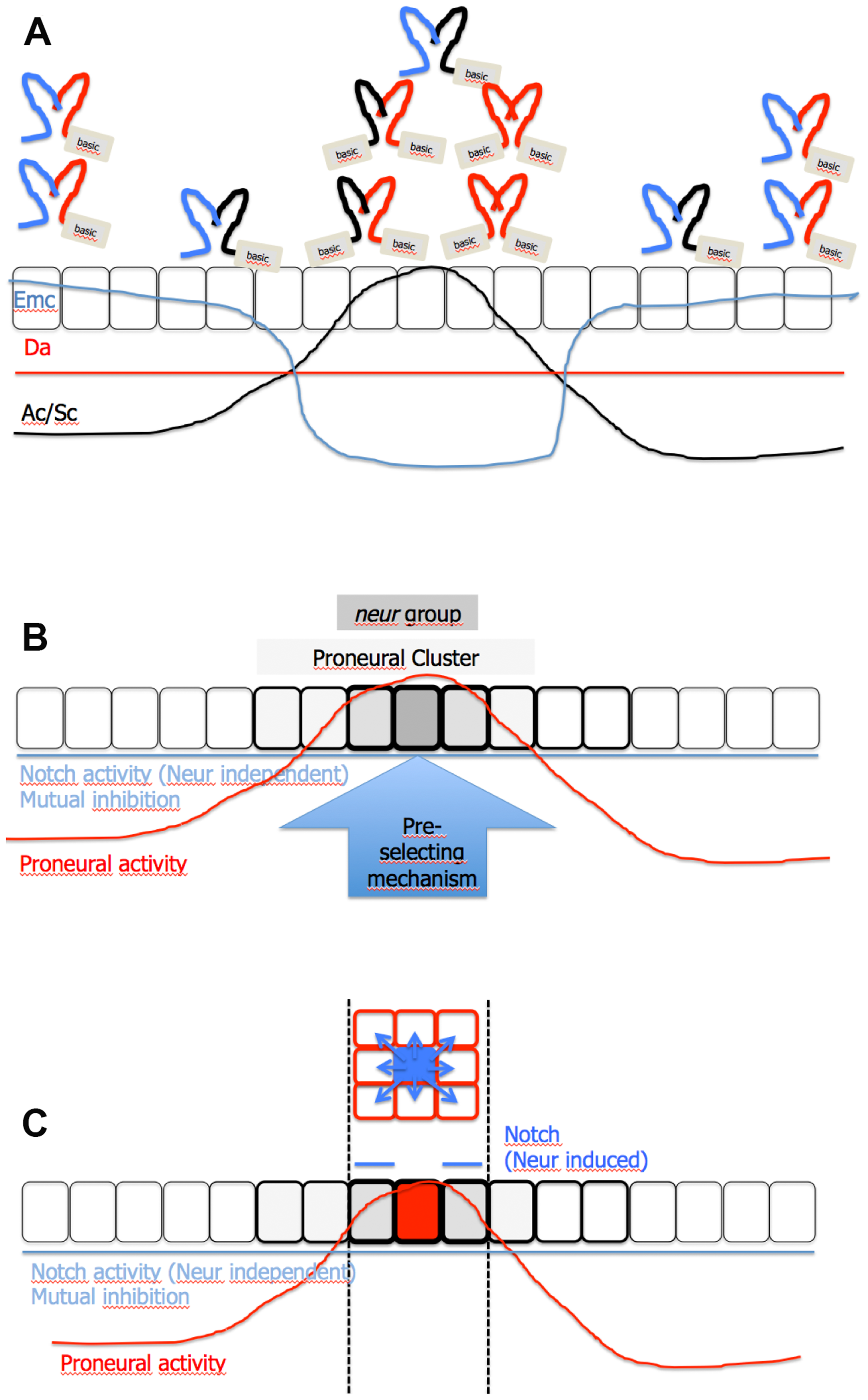 Model of SOP selection.