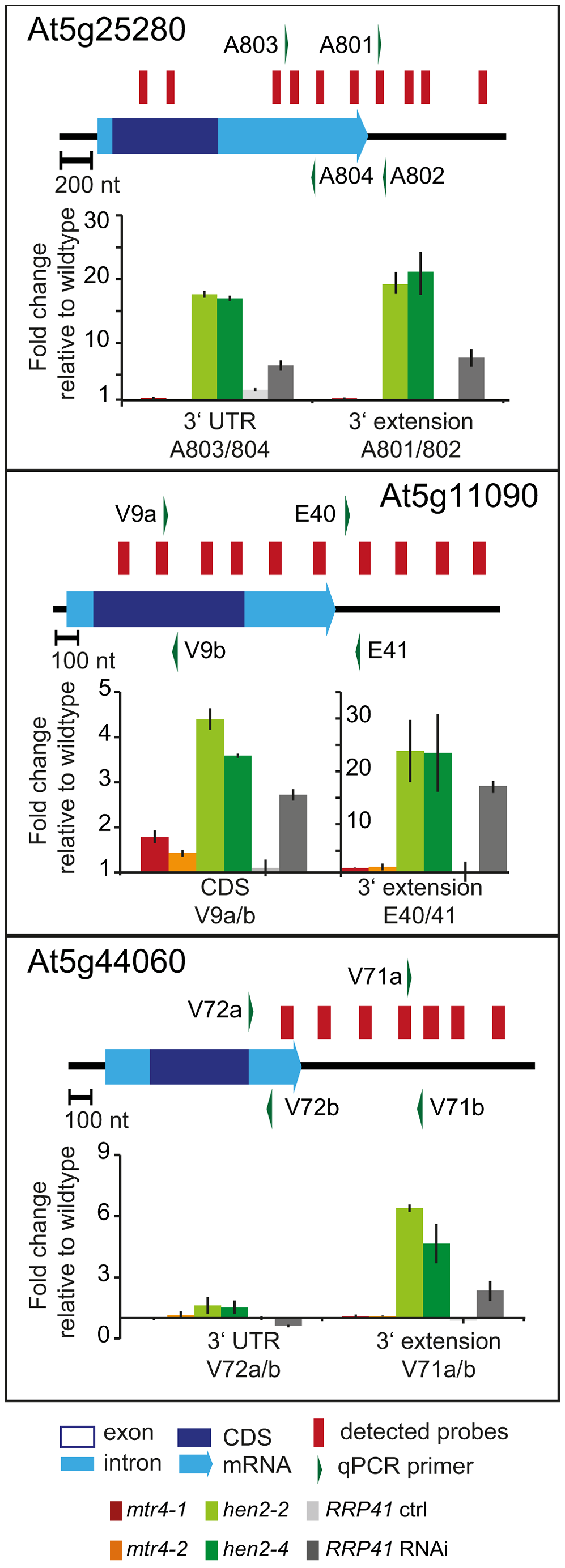 Accumulation of 3′ extended mRNAs in <i>hen2</i> mutants.
