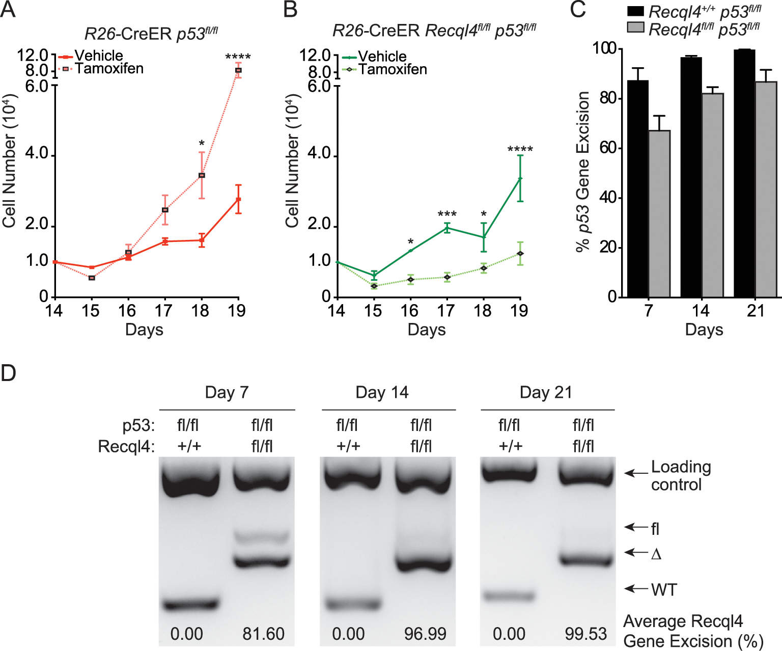 Concurrent loss of p53 does not modify the Recql4 phenotype.