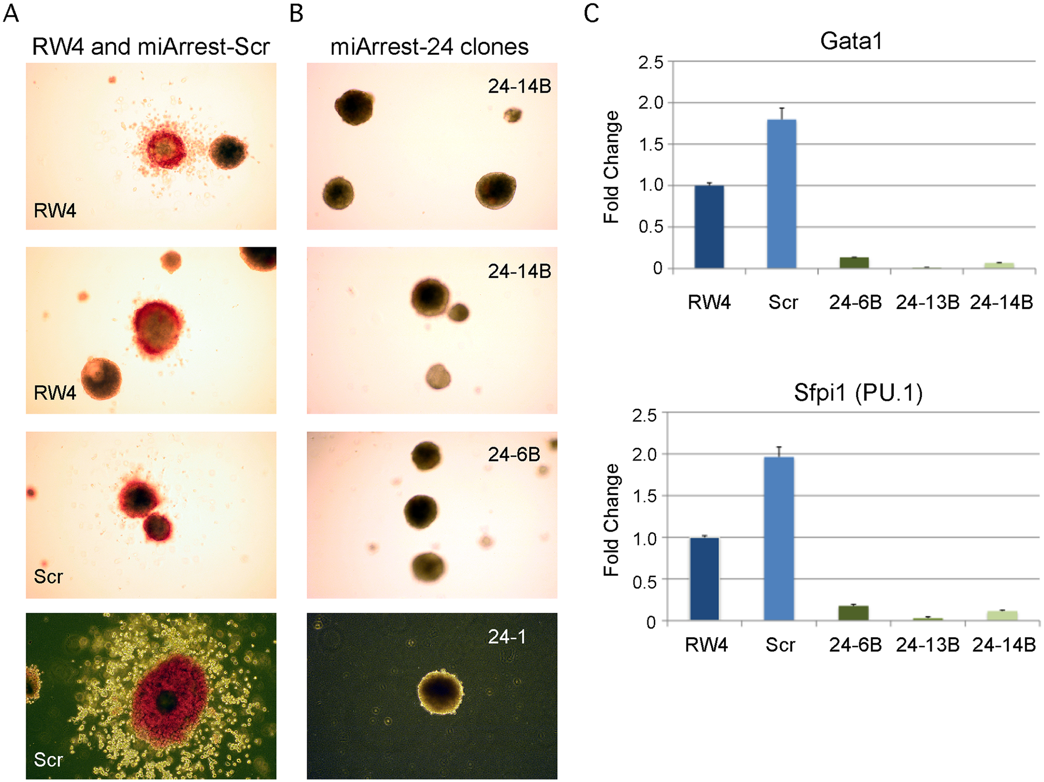 MiR-24 is required for blood development from mouse embryonic stem cells.
