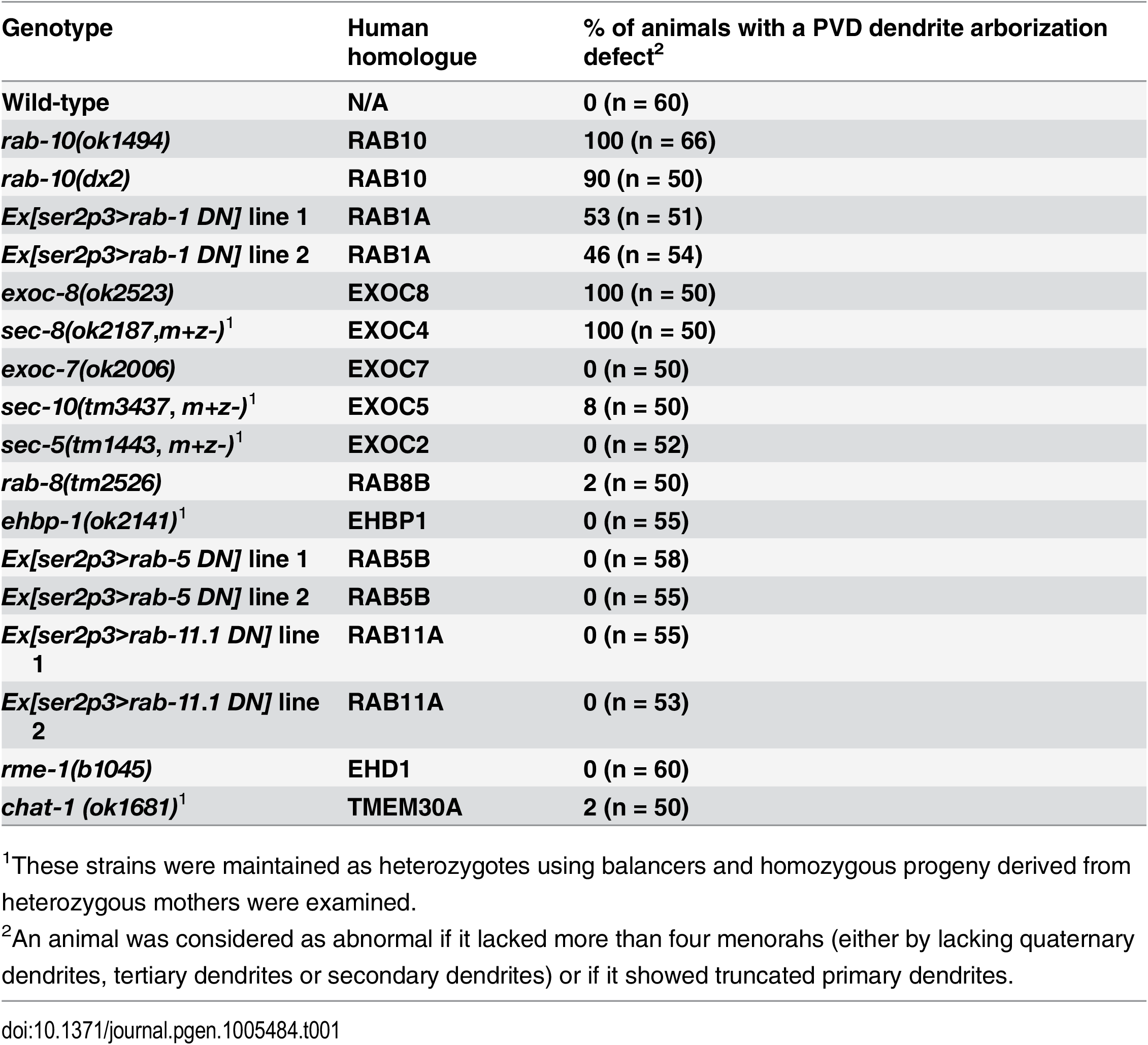 PVD dendrite morphogenesis is defective in <i>rab-10</i>, <i>rab-1</i> and exocyst mutants.