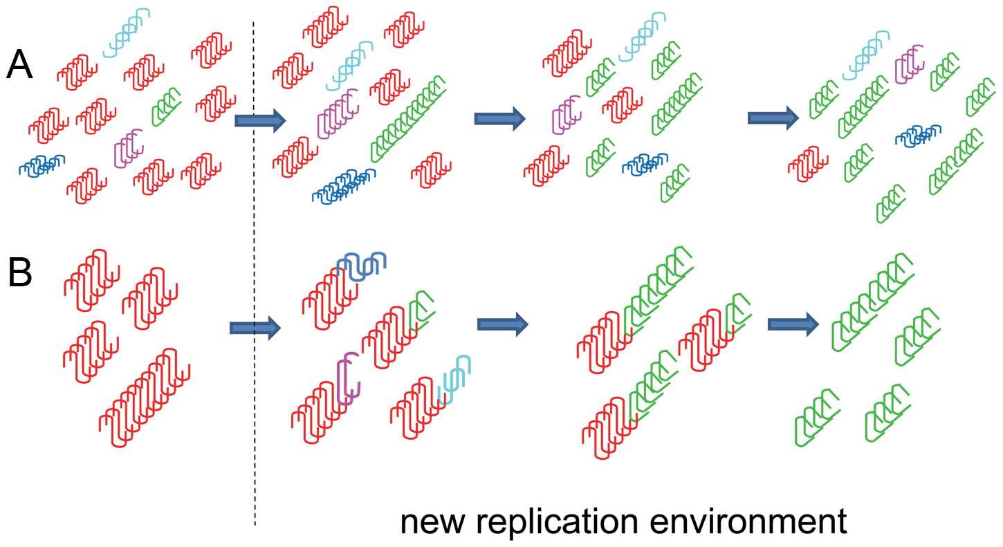 Schematic diagrams illustrating two alternative hypotheses on origin of prion mutations.