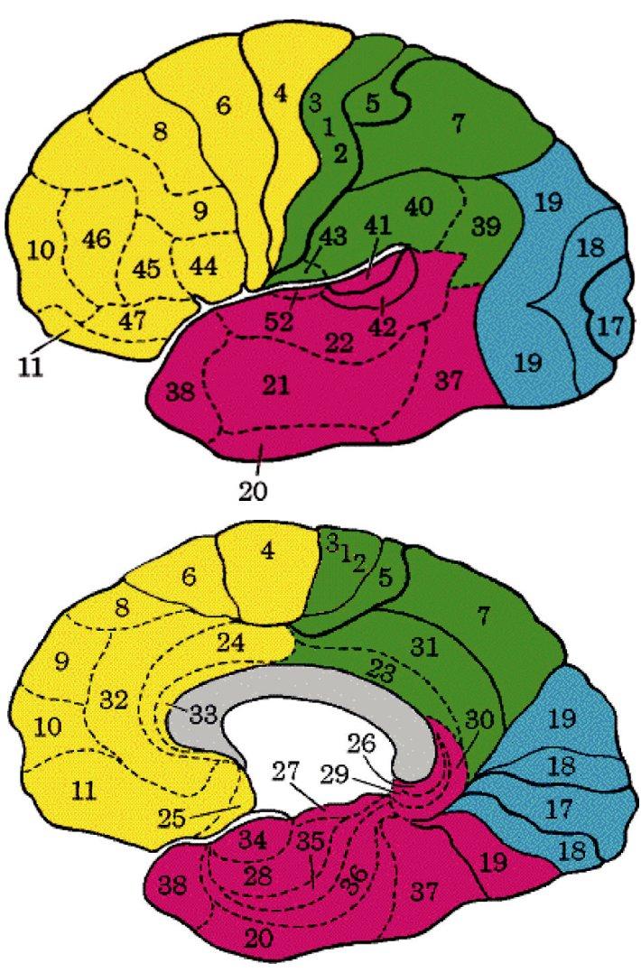 A. Brodmanova mapa, zevní plocha levé hemisféry  B. Brodmanova mapa, vnitfiní plocha pravé hemisféry