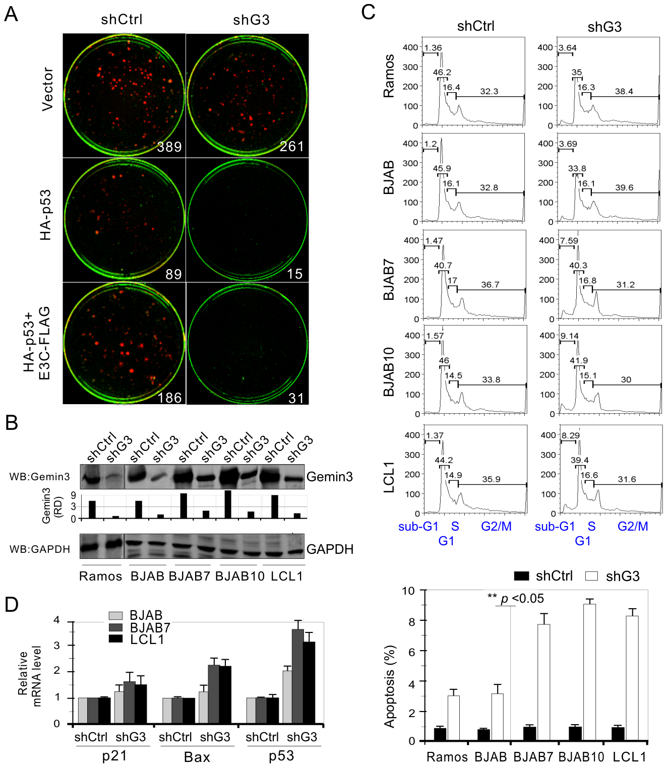Gemin3 knockdown attenuates EBNA3C-mediated inhibition of p53-induced apoptosis.