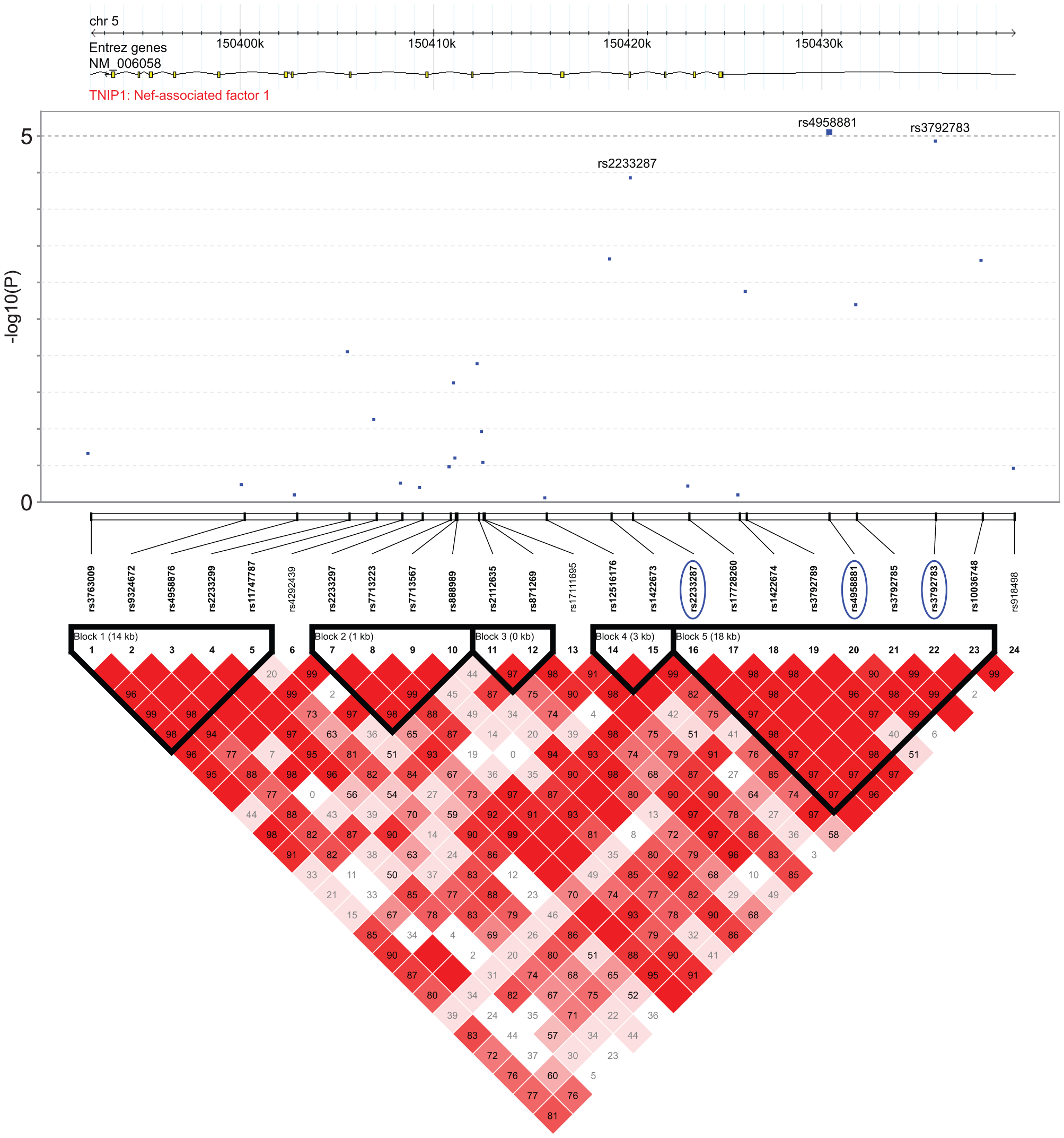 Association and linkage disequilibrium patterns at the TNIP1 gene.