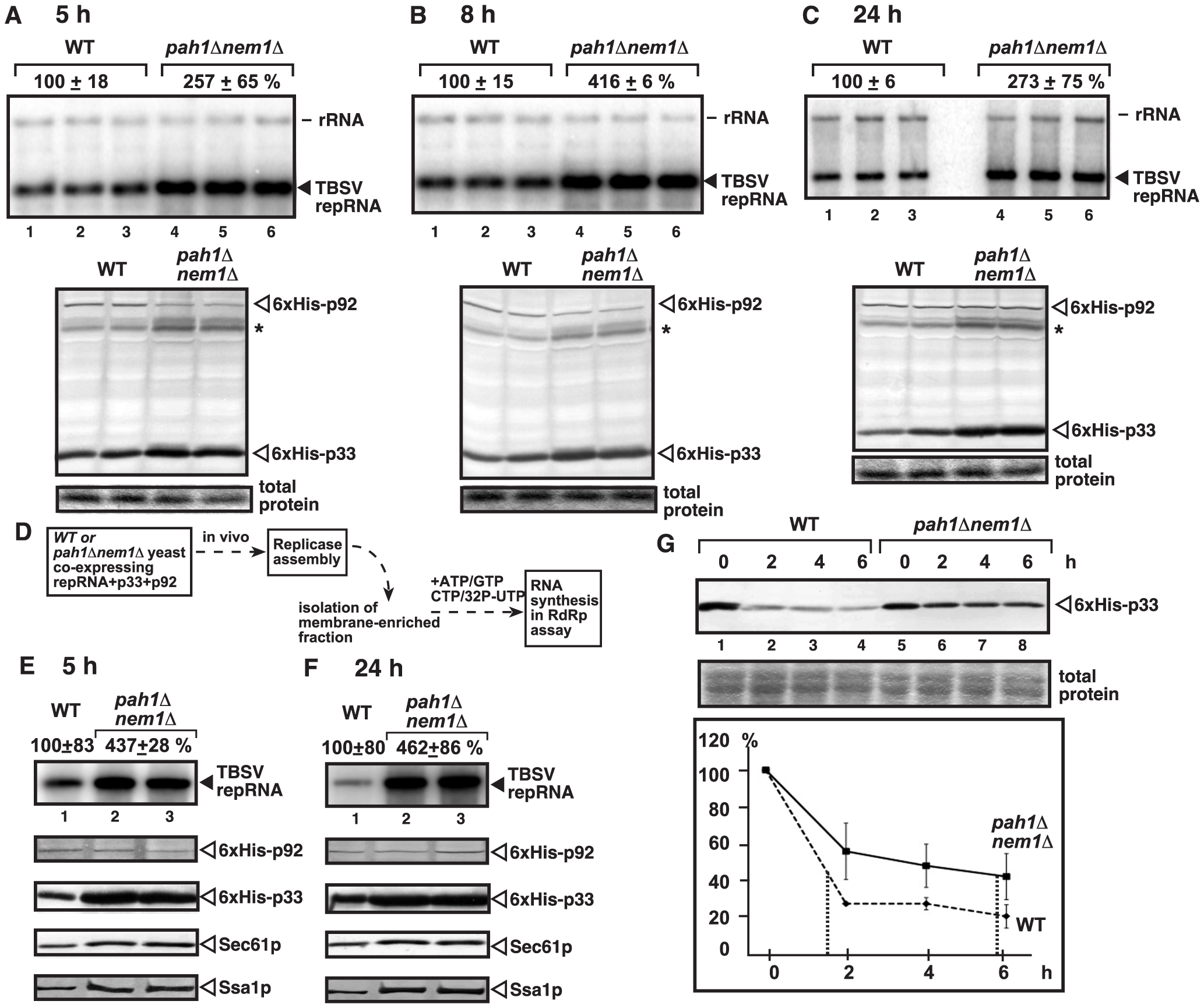 Increased TBSV repRNA replication and enhanced p33 stability in yeast lacking Pah1p.