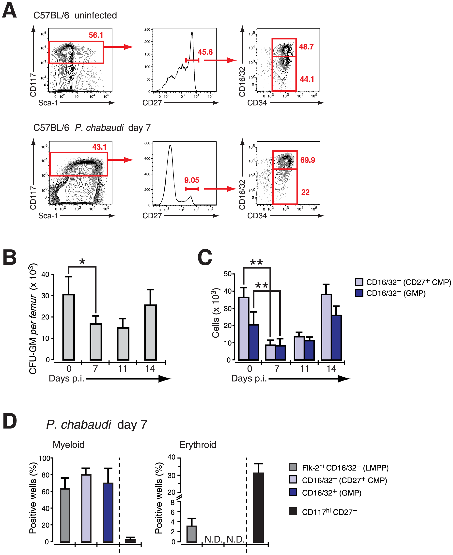 Effect of acute infection with <i>P. chabaudi</i> on myeloid progenitor cells in the bone marrow.