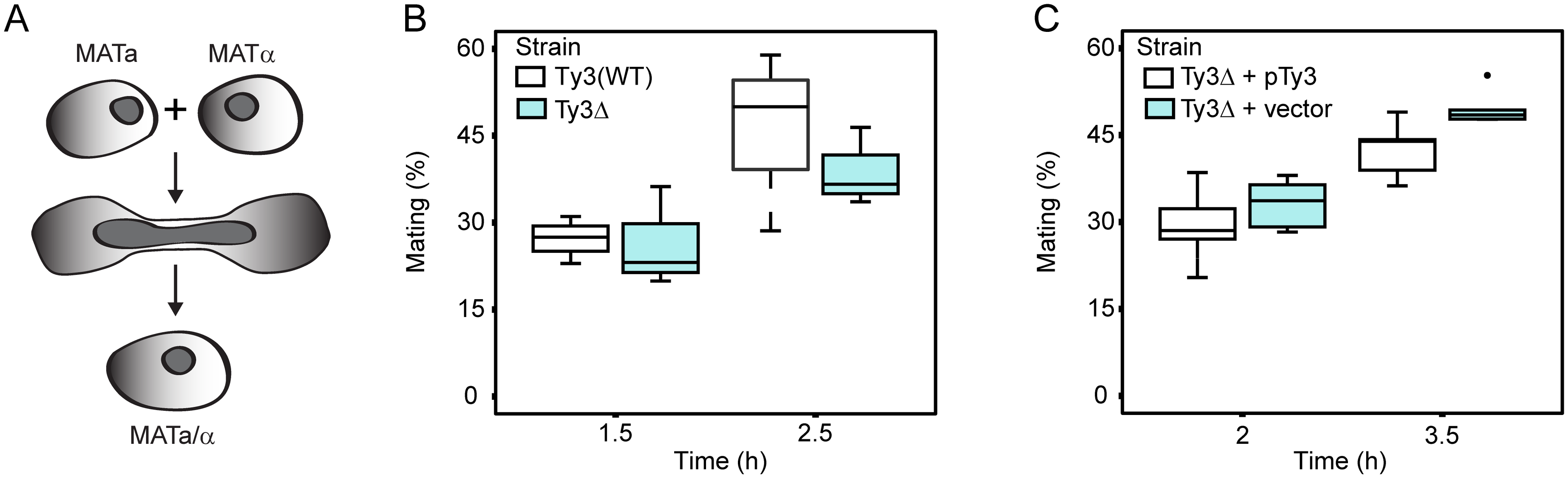Ty3 expression effects on mating efficiency.