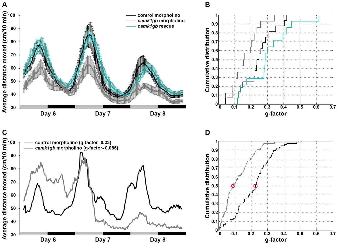 The effect of <i>camk1gb</i> knockdown on larval locomotor activity rhythms.