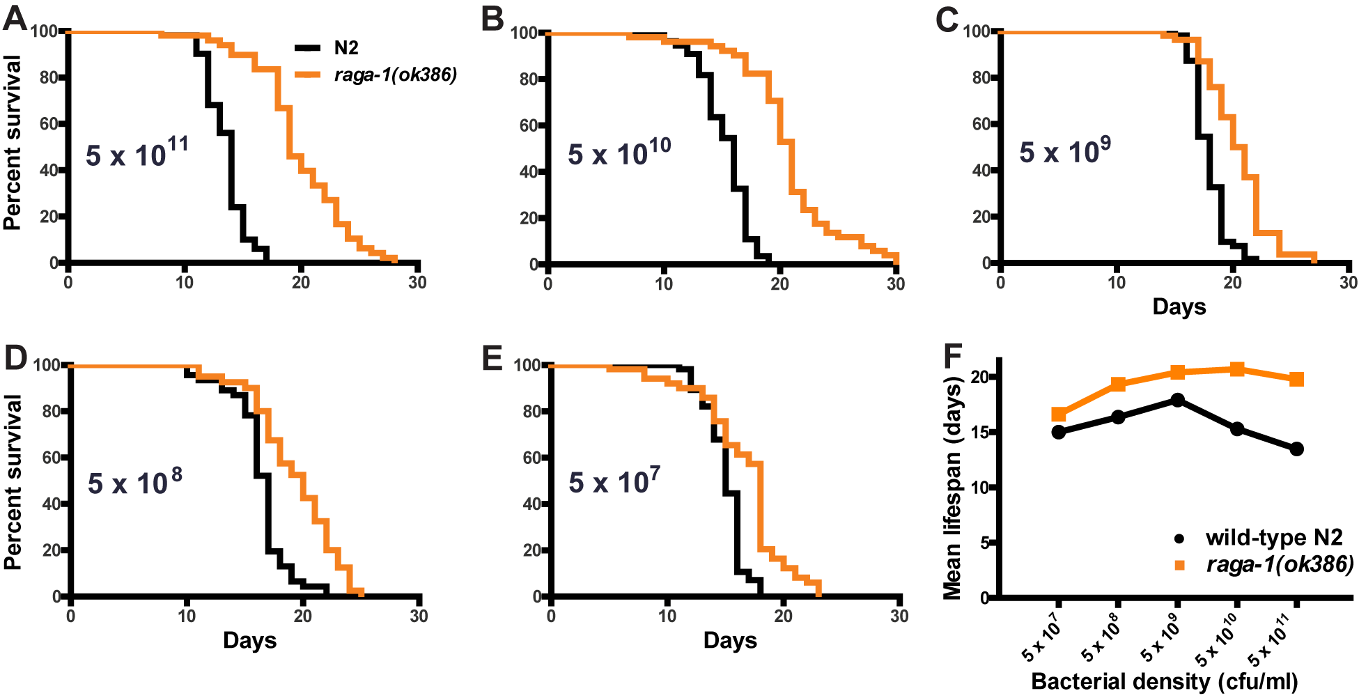 Effect of dietary restriction on <i>raga-1(ok386)</i> lifespan.