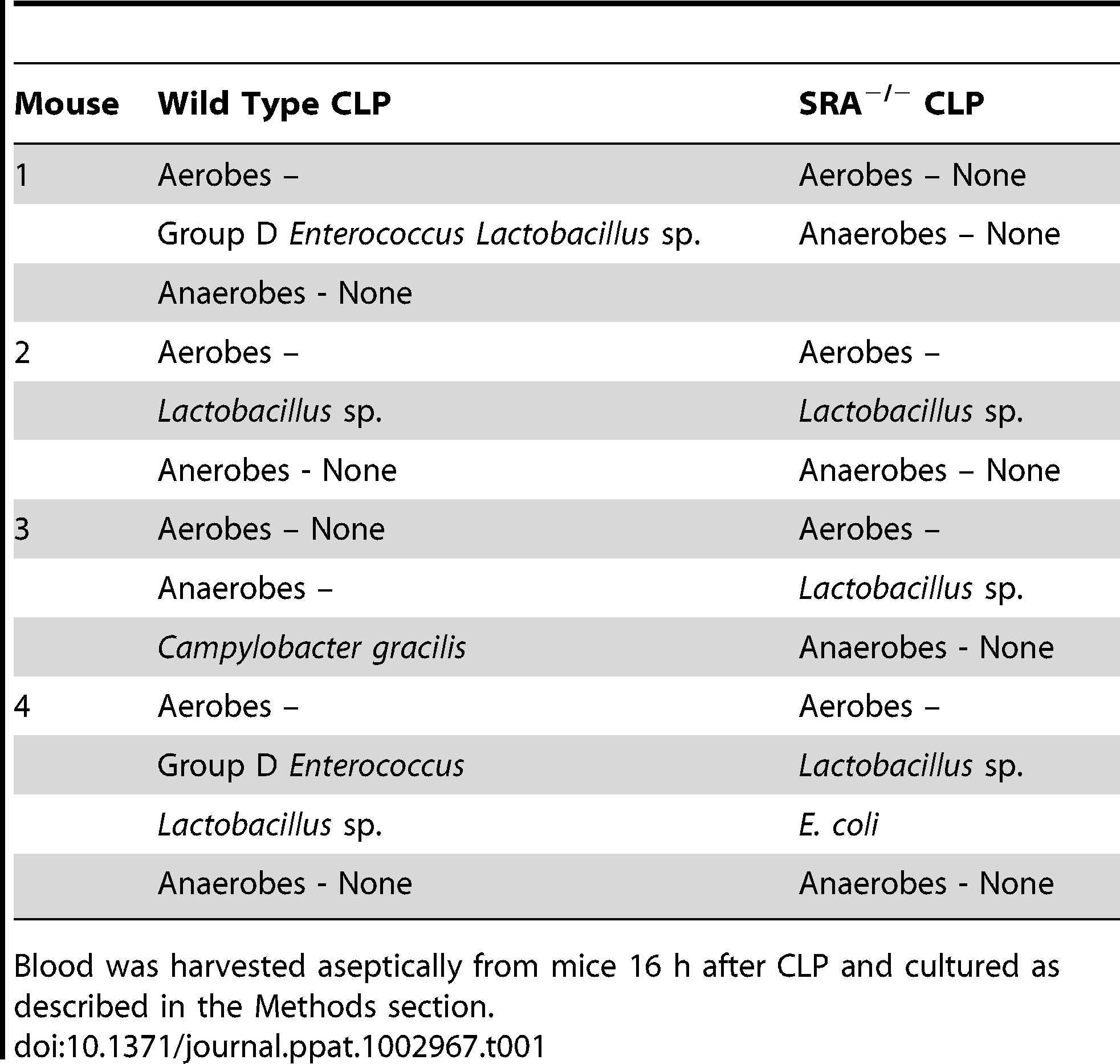 Comparison of bacterial content and growth characteristics of blood from wild type and SRA<sup>−/−</sup> wild mice 16 hours after CLP sepsis.