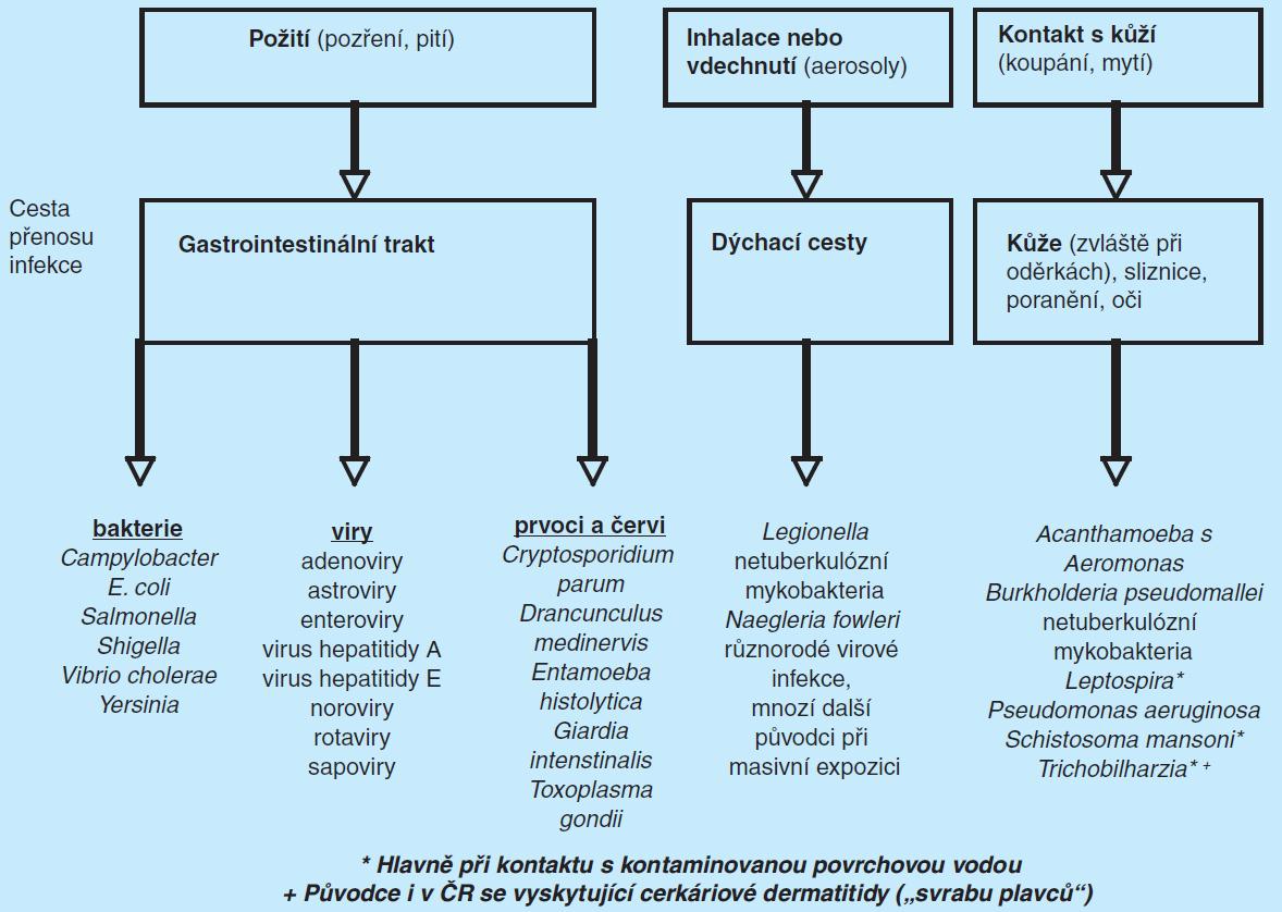 Cesty přenosu patogenů spojených s vodou (upraveno podle WHO (28)), zde nejen pitnou, ale i rekreační
