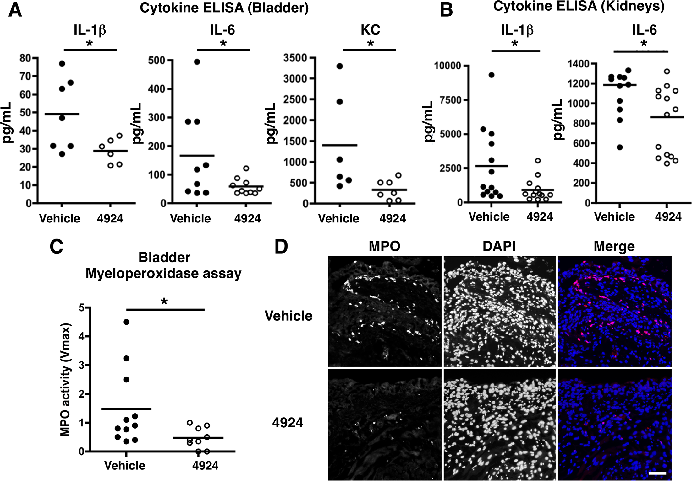 Reduced UPEC-mediated inflammatory damage to bladder epithelium with AKB-4924 pretreatment.