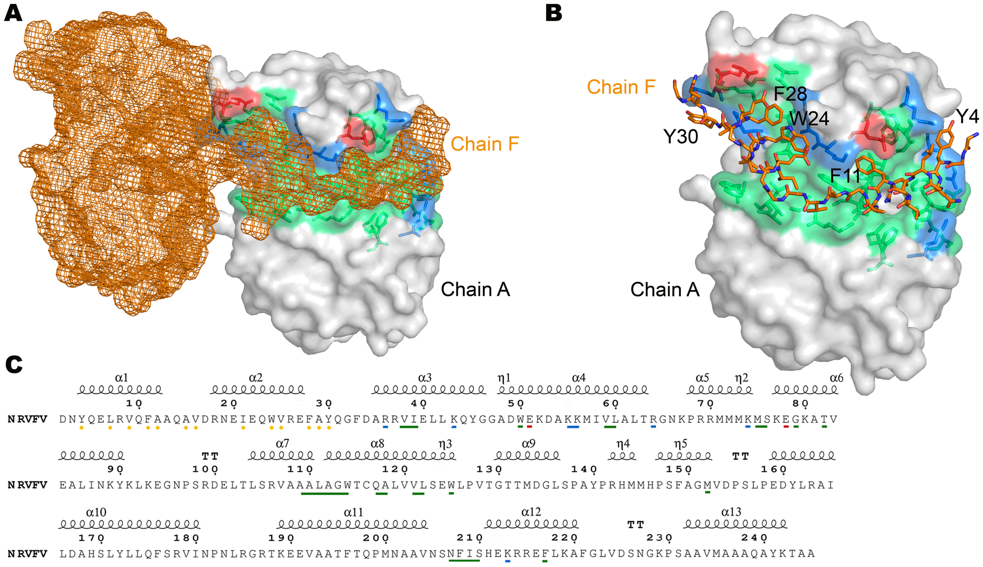 Interaction between adjacent N subunits in the hexamer.