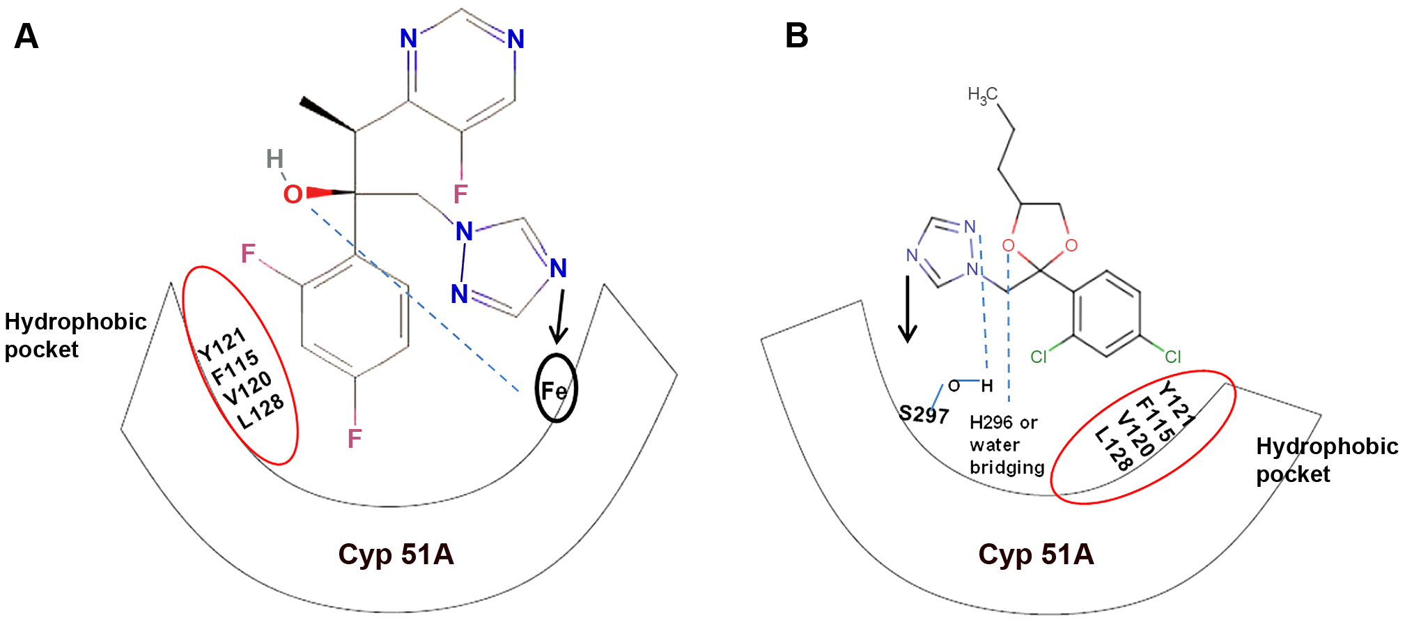 Diagrammatic representation of similar structural binding mode of medical triazoles and triazole fungicides to <i>cyp</i>51A of wild-type <i>A. fumigatus</i>.