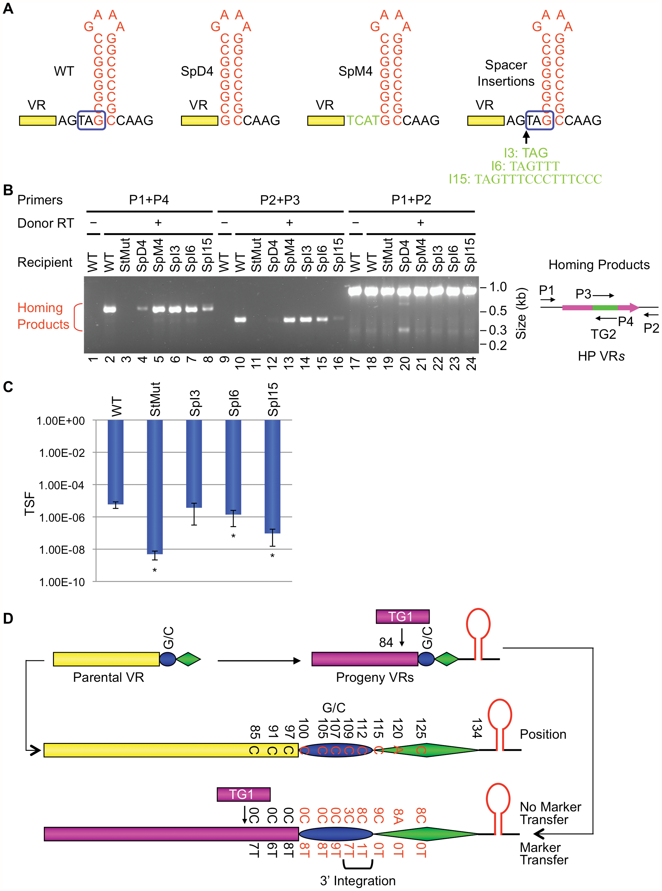 The VR-hairpin/cruciform spacer affects target recognition efficiency but not 3′ cDNA integration site.